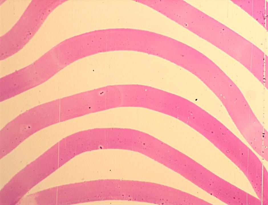 pink stripes.jpg