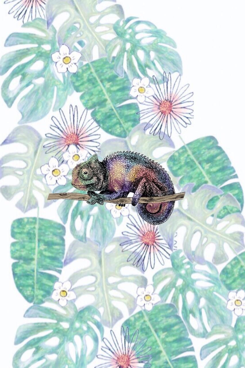 chameleon 2.jpg