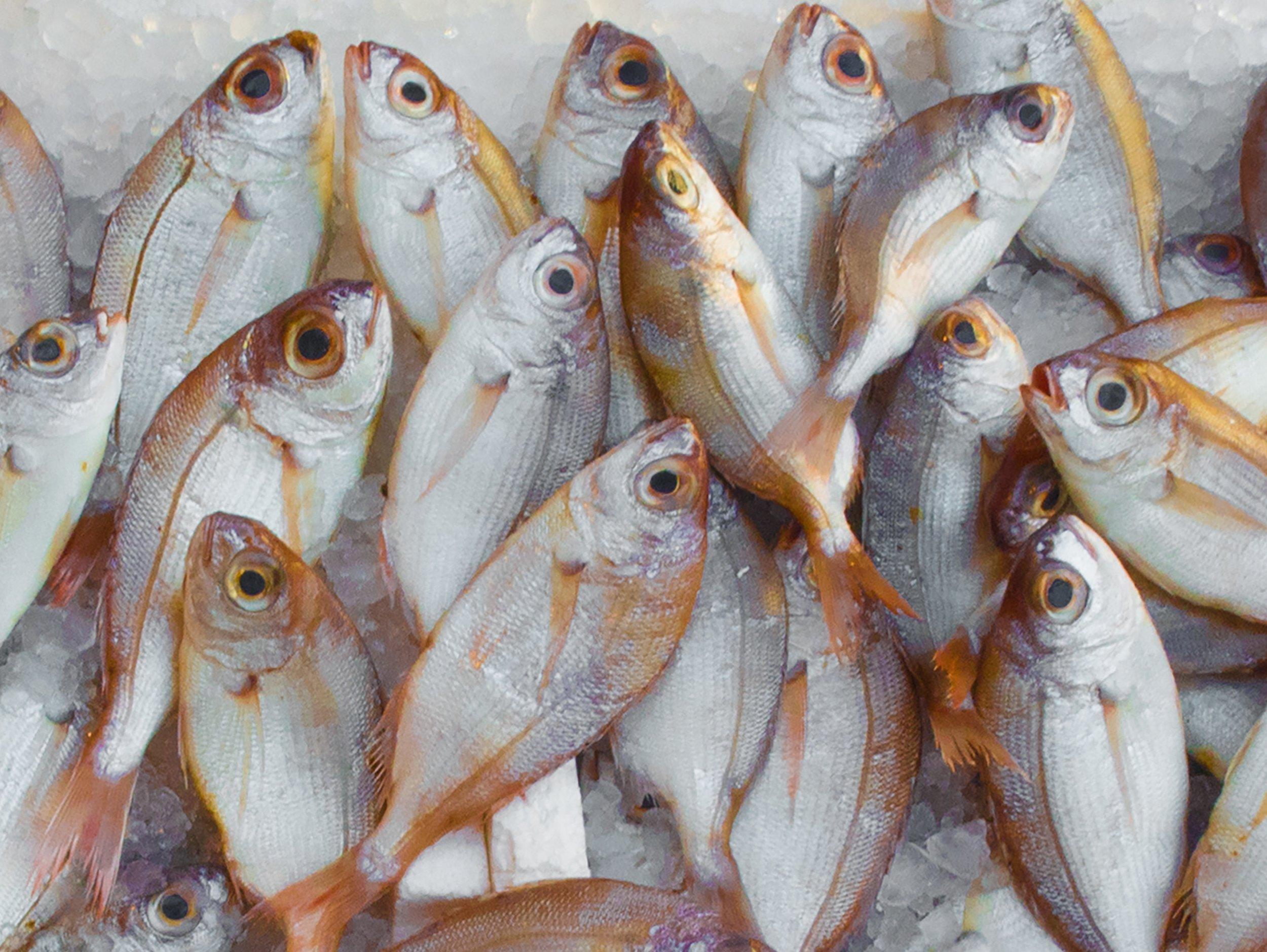 catch-fish-fish-market-229789.jpg