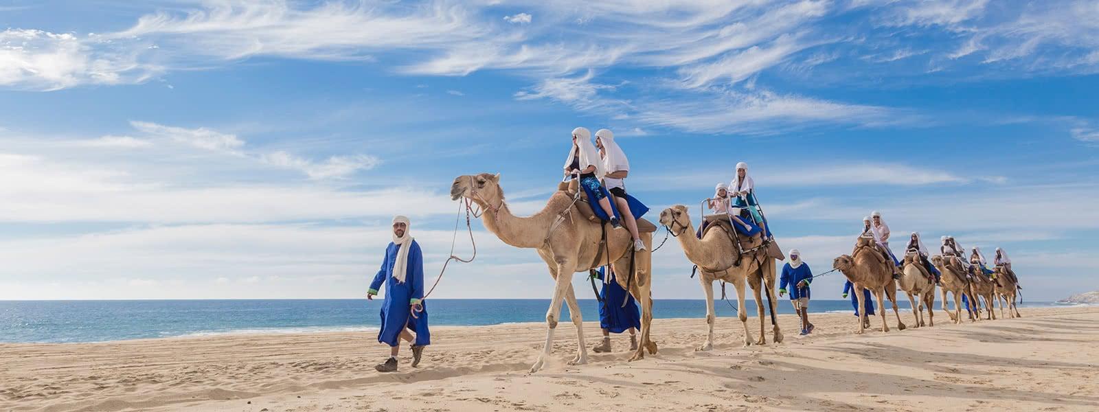 CamelSafari.jpg