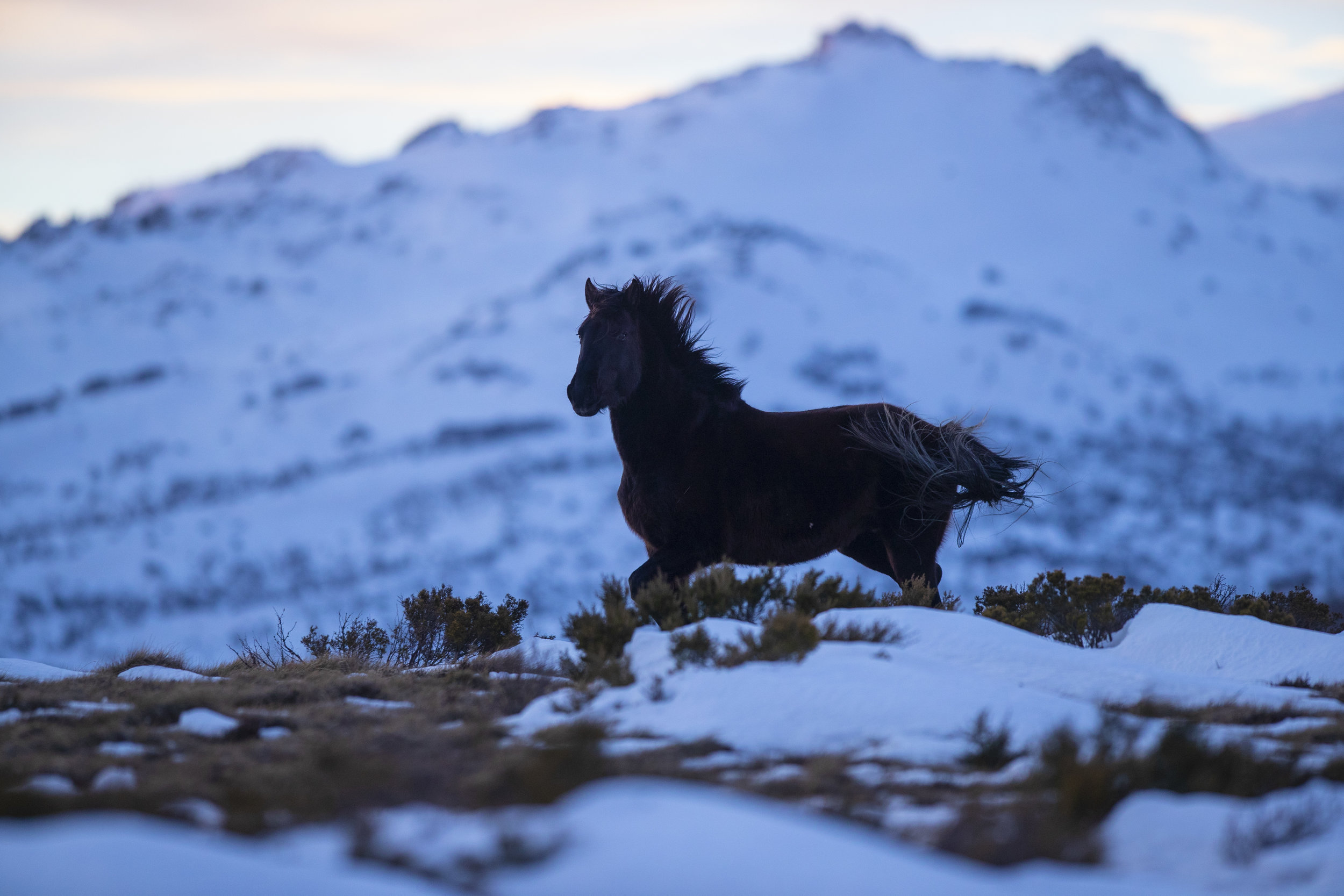 brumby_mountain_background_black.jpg