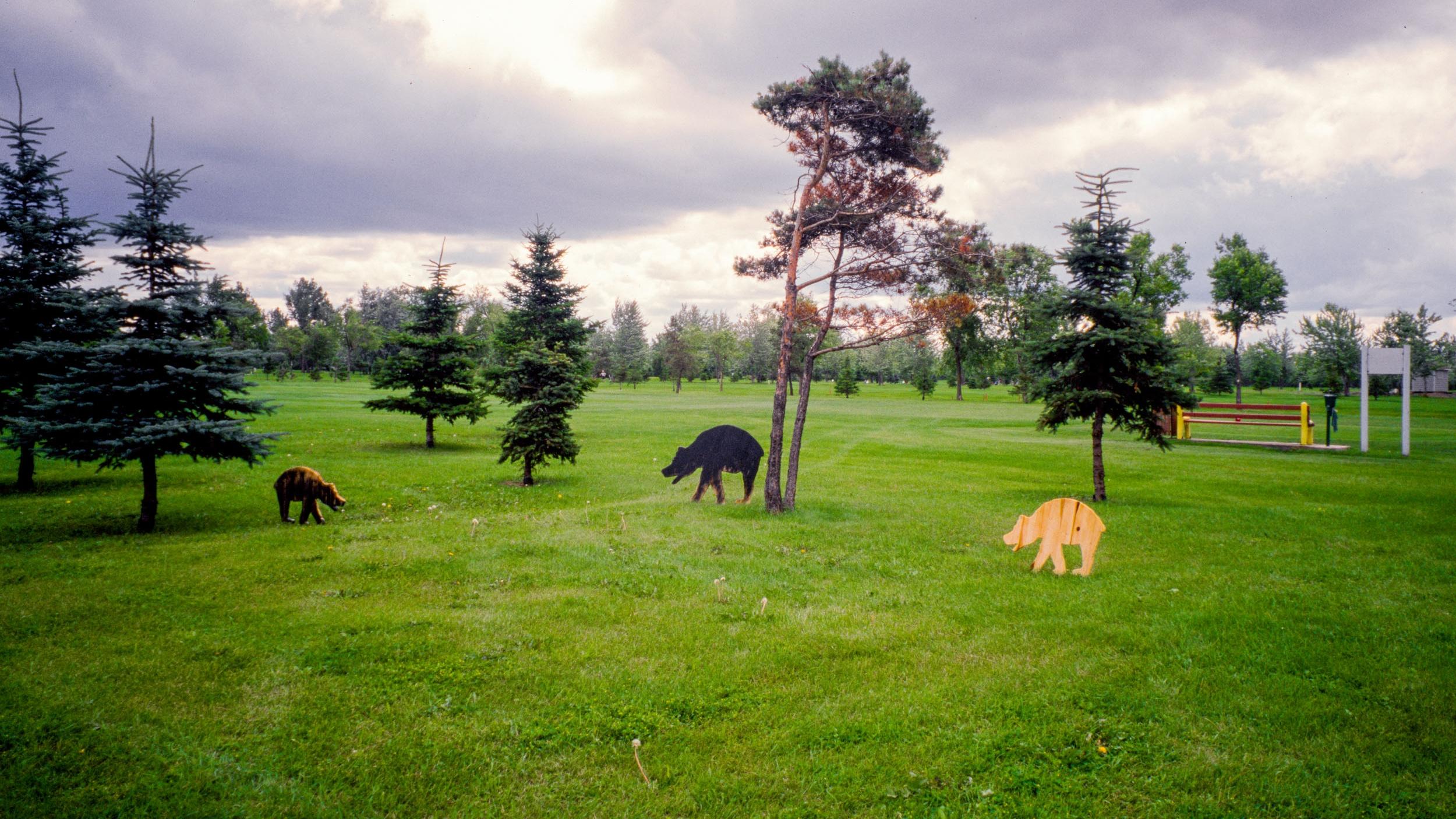 Petite ourse de Gatineau - 2000