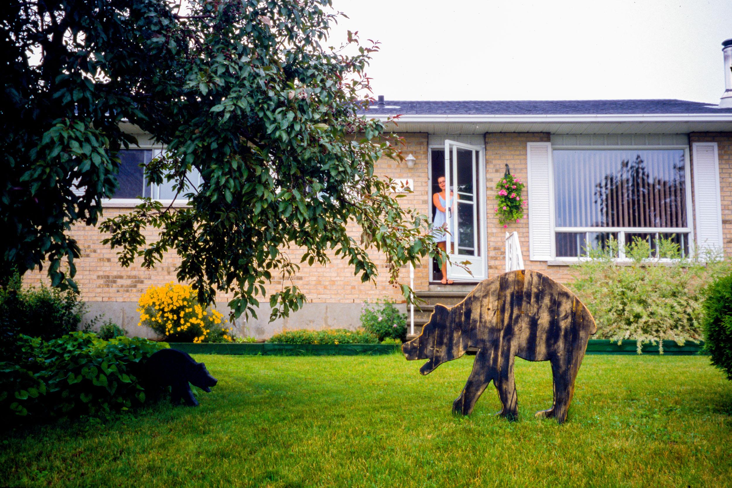 Petite ourse de Gatineau