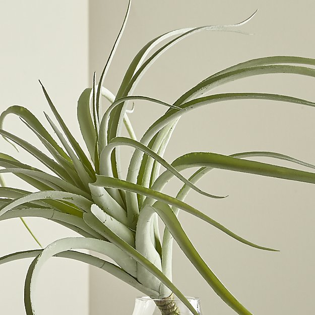 Tillandsia Grey Faux Succulent Stem