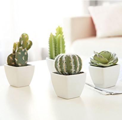 4 Mini Succulents