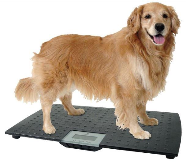 Large digital pet scale