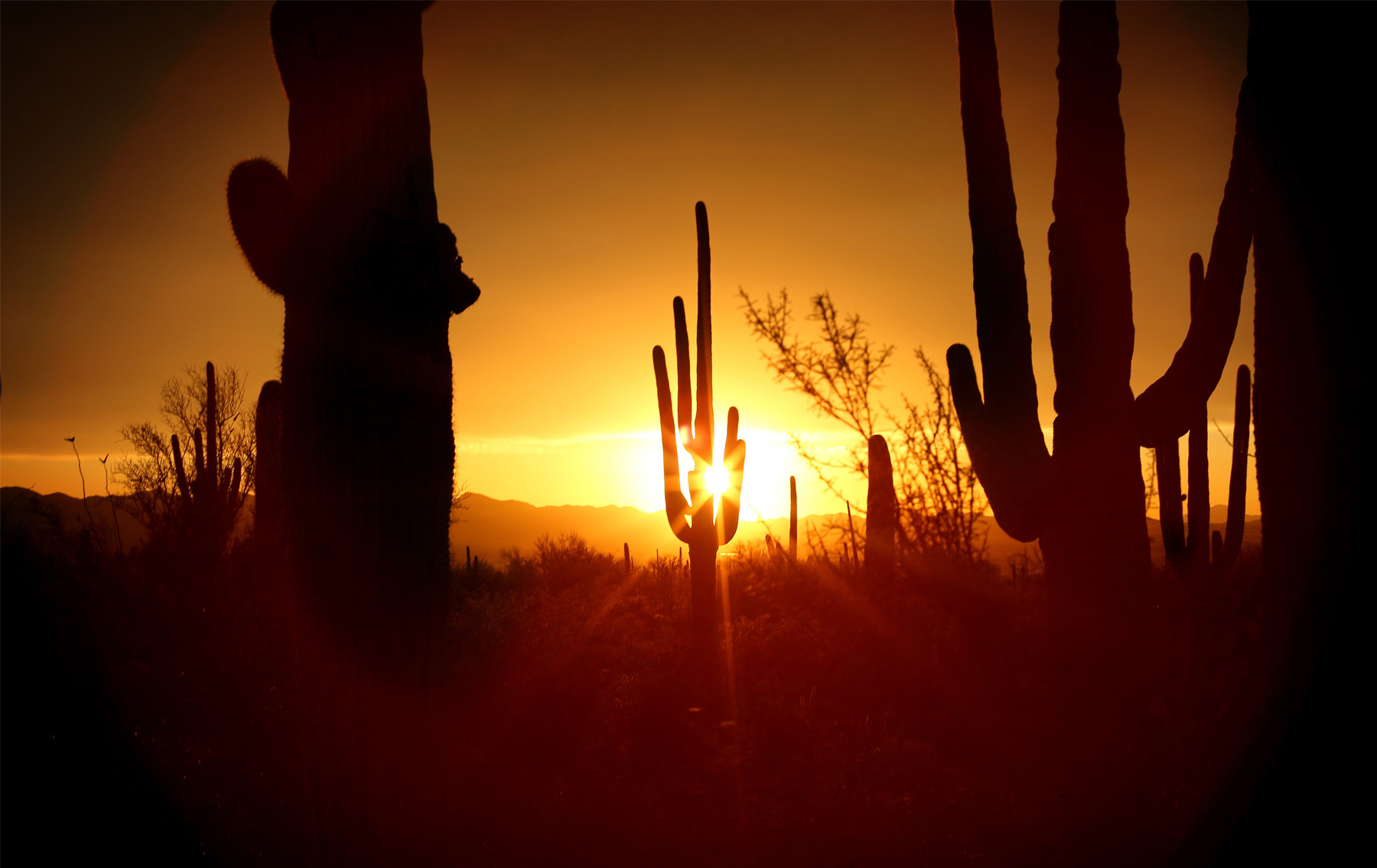 14-Tuscan-Arizona-Wedding-Photography-by-Vick-Photography-Destination-Wedding-Desert-Old-Tucson-Studios-Cactus-Sunset-Night-Photography-Elsa-and-Arthur.jpg