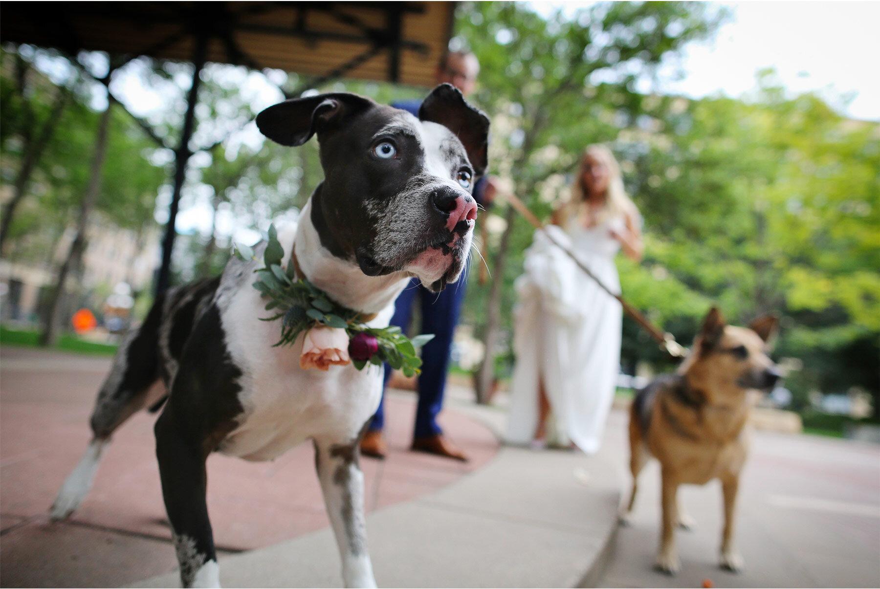 07-Vick-Photography-Wedding-Minneapolis-Minnesota-Bride-Groom-Dogs-Danielle-and-Tom.jpg