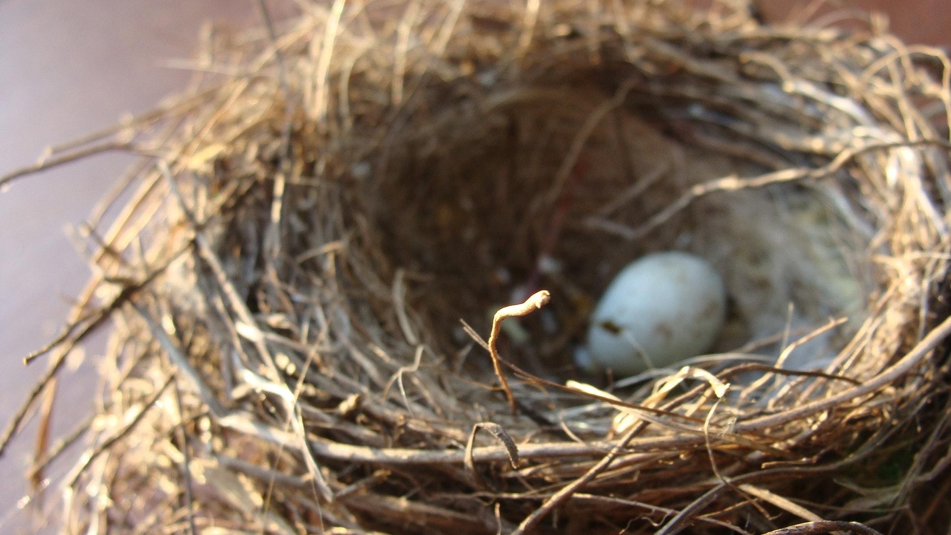 bird-egg-home-88121.jpg
