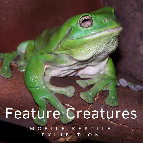 Feature creatures logo.jpg