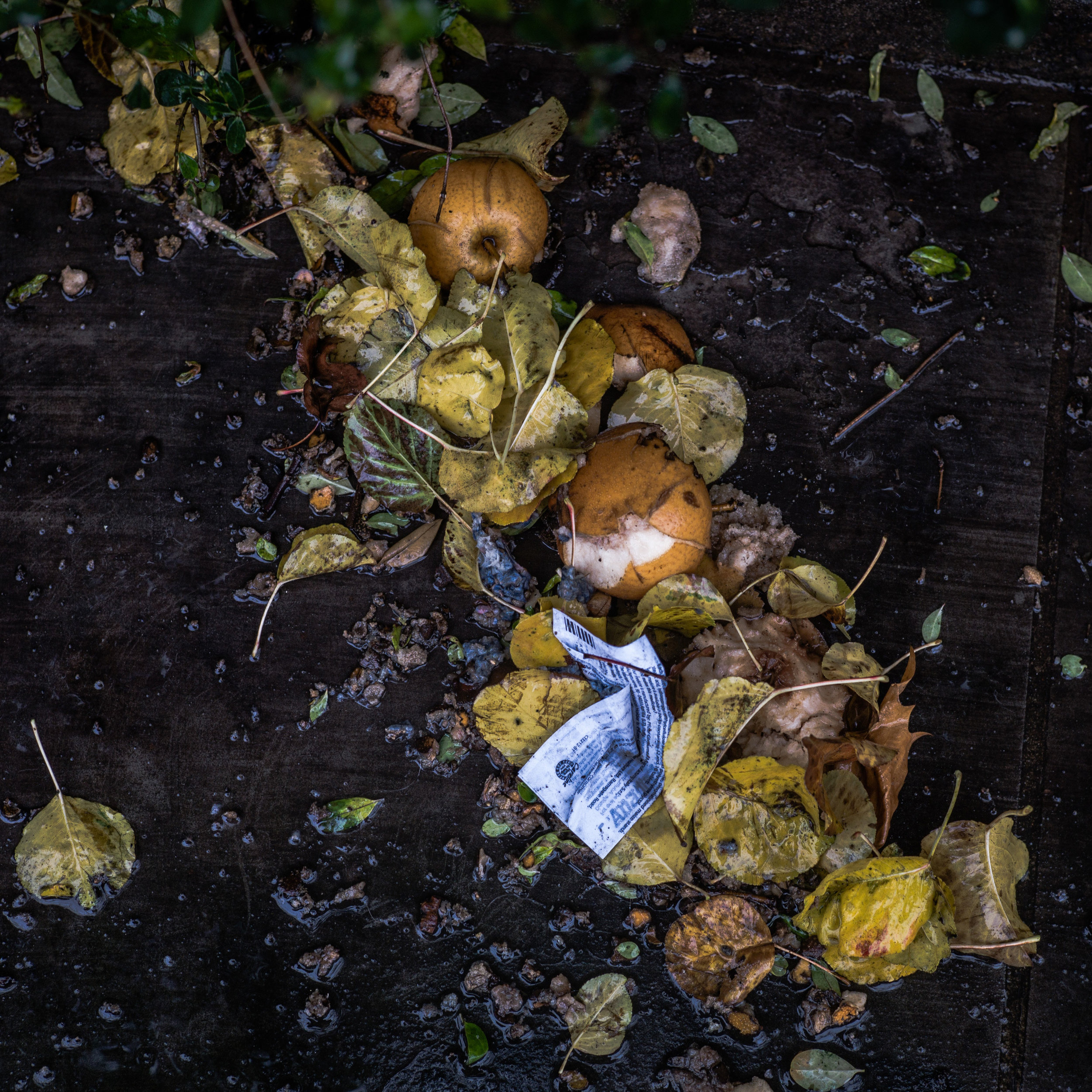 Each year over 3,700 tons of food waste is buried in the Pitkin County Landfill. -