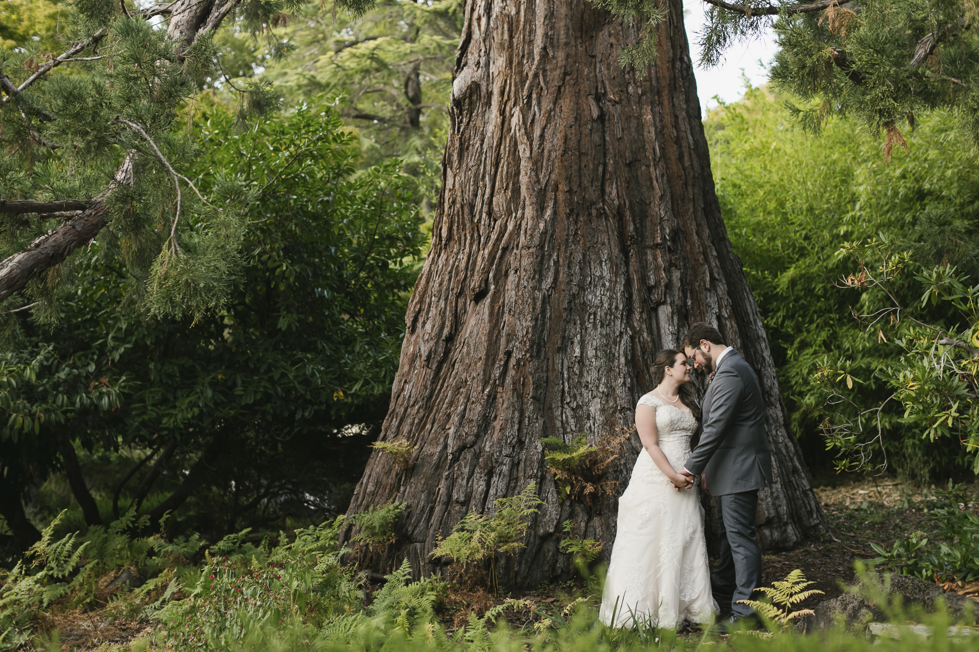 Wedding couple stand together under a Sequoia tree