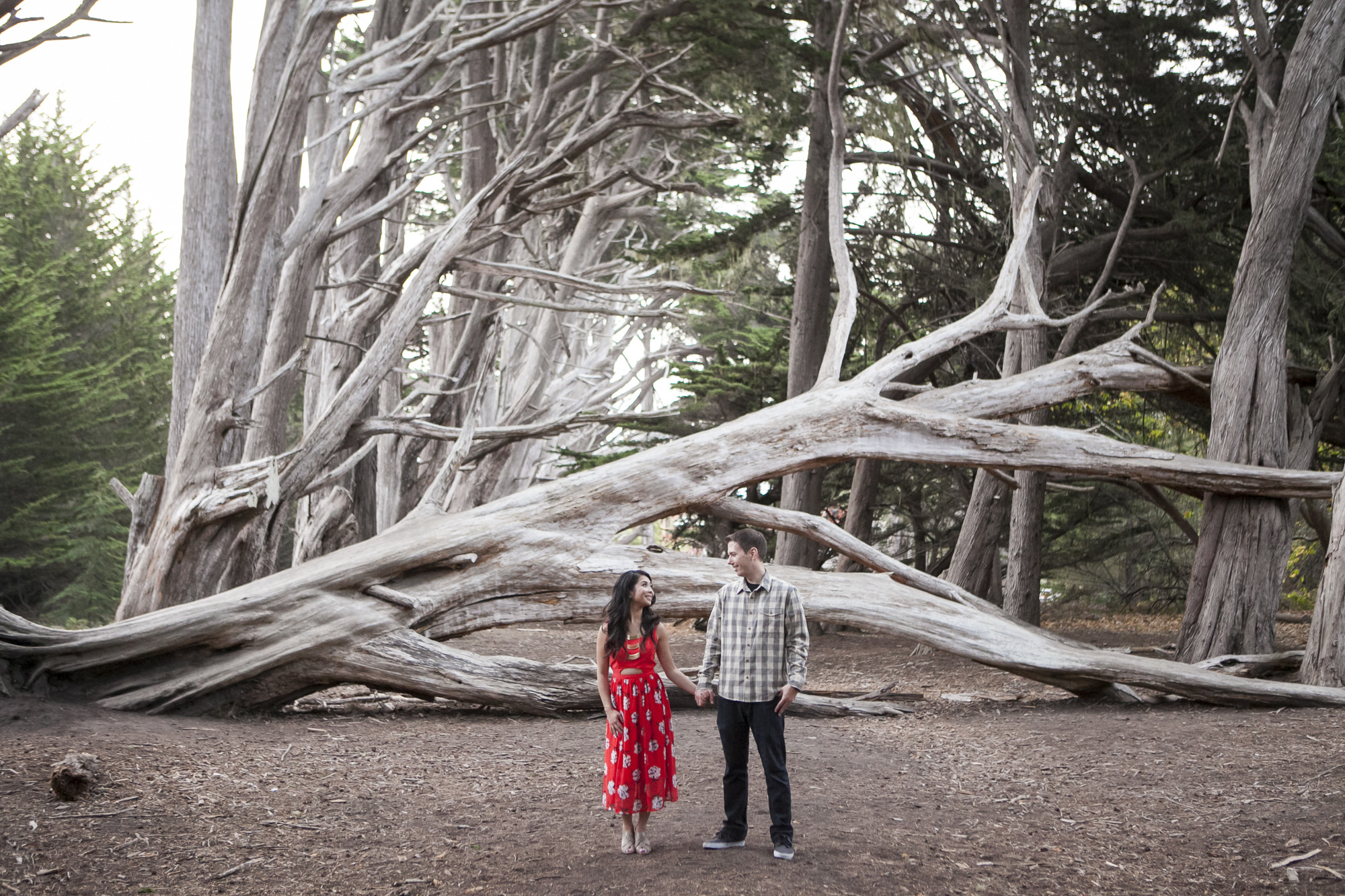 Engaged couple stand in front of fallen tree in Half Moon Bay