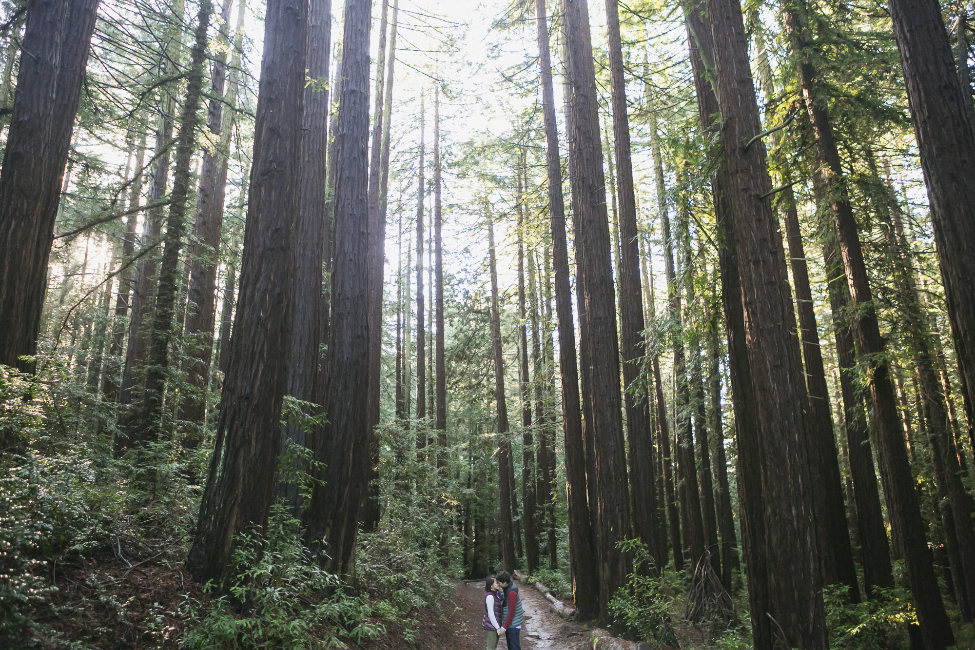 Engaged couple in redwood forest in the Oakland hills