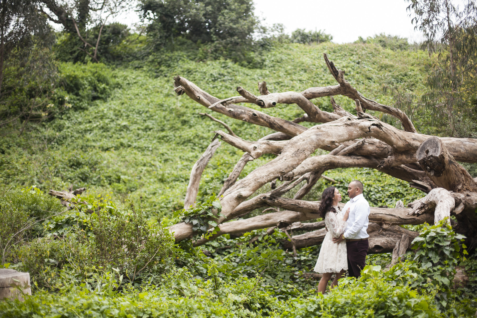 Couple stand by fallen tree in San Francisco's Presidio