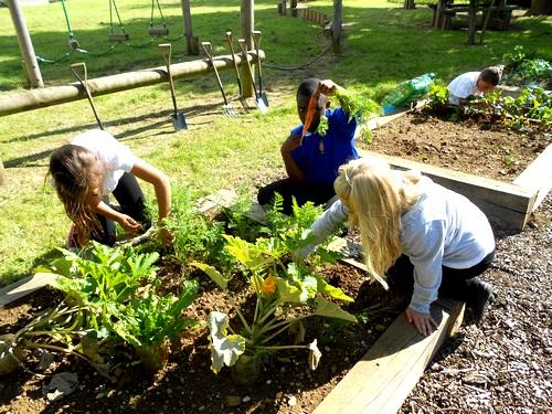 Over-the-Garden-Wall-gardening-forum.jpg