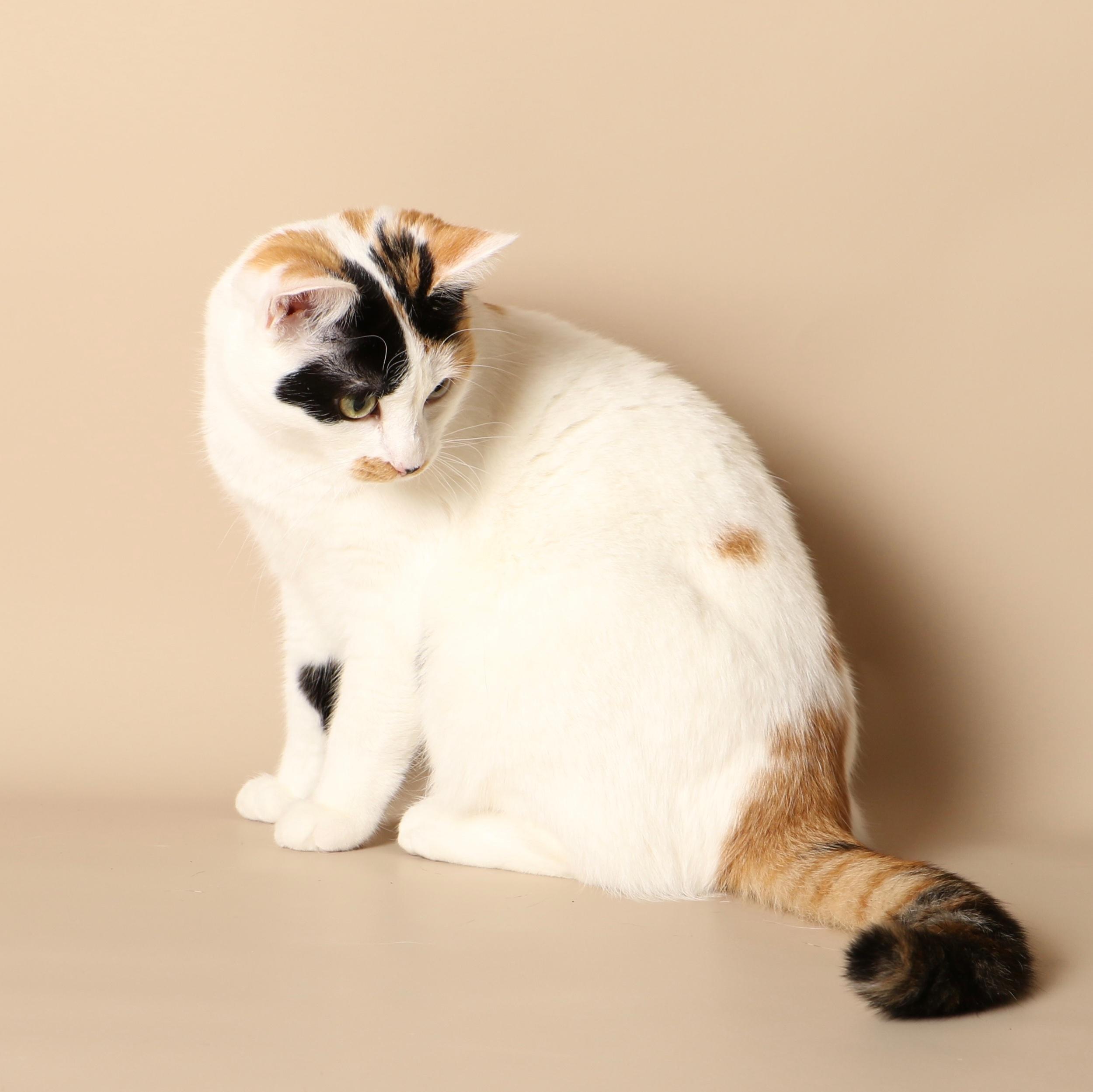0969cats.jpeg