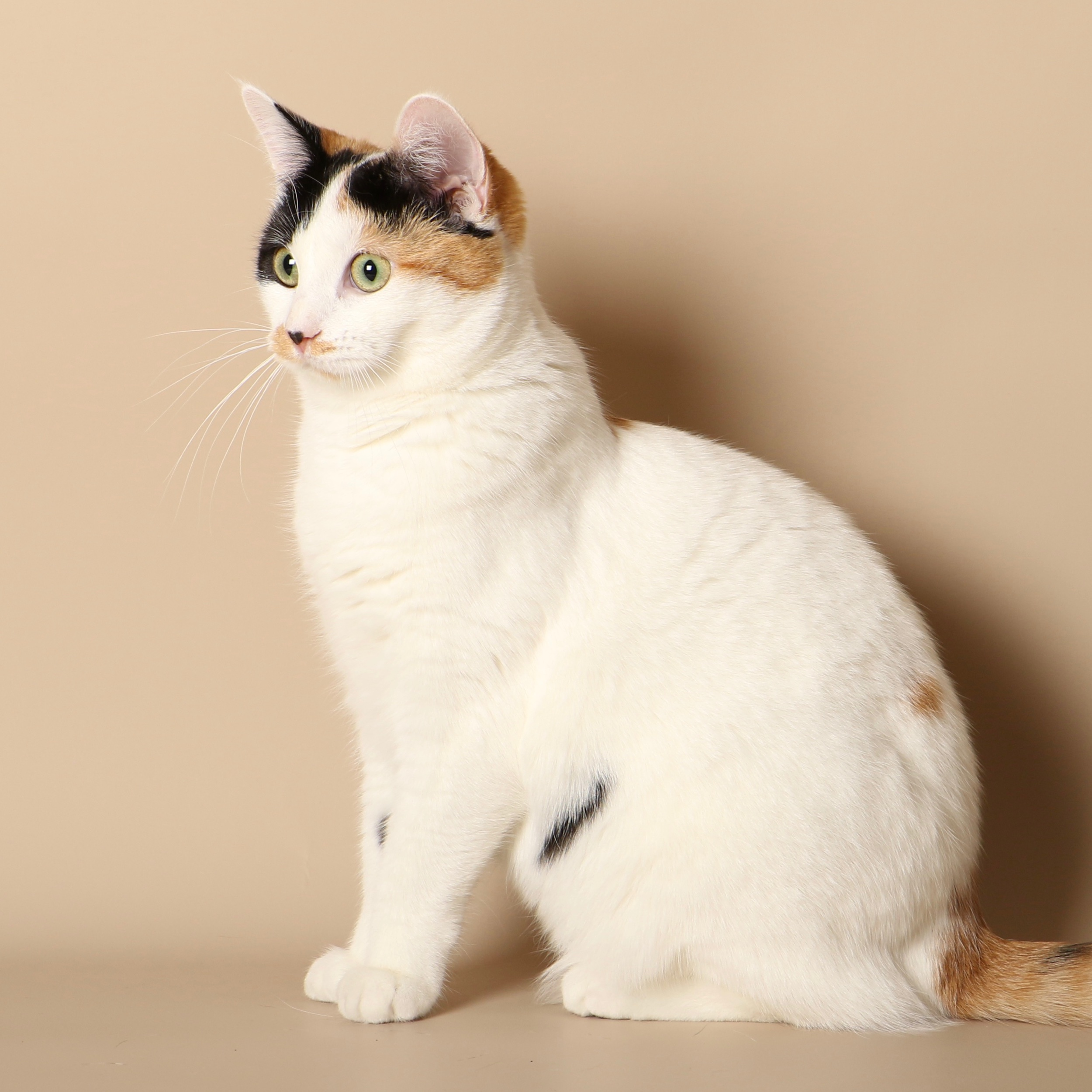 0966cats.jpeg
