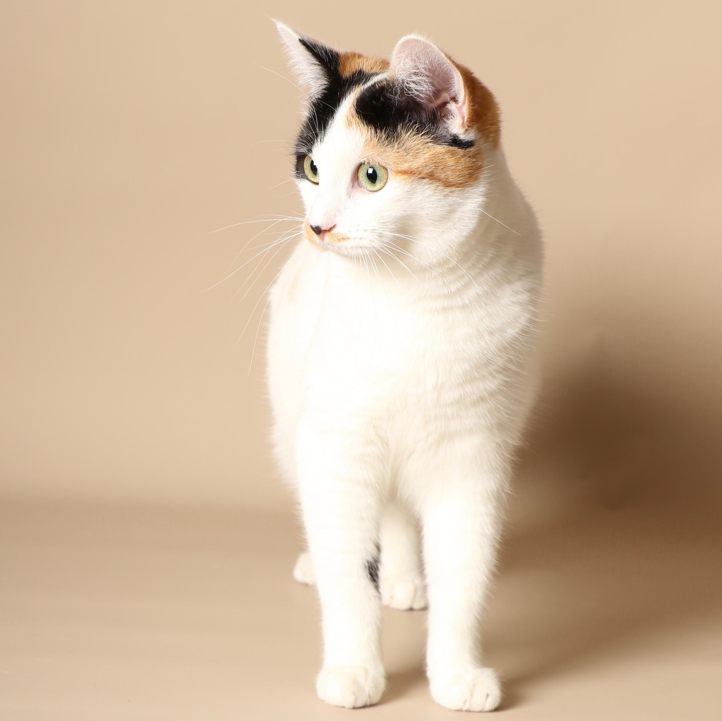 0960cats.jpeg
