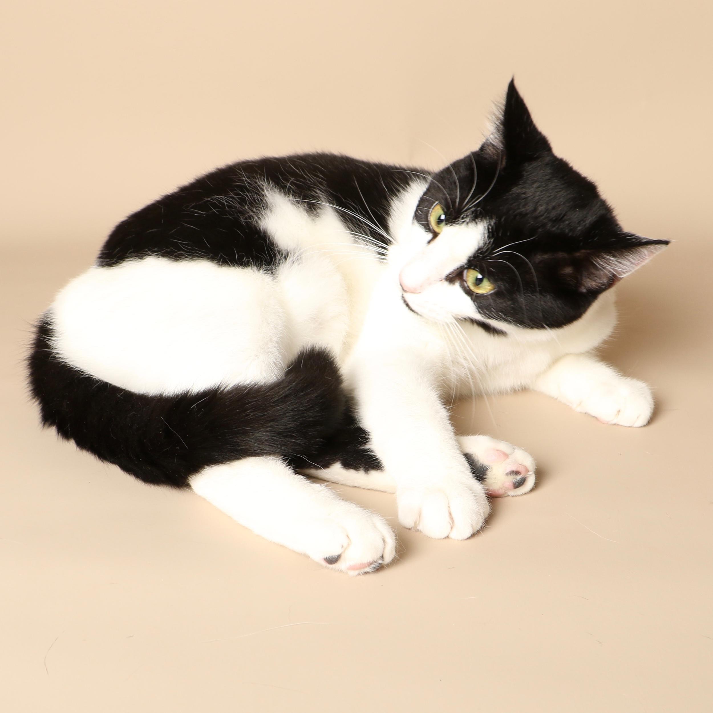 0696cats.jpeg