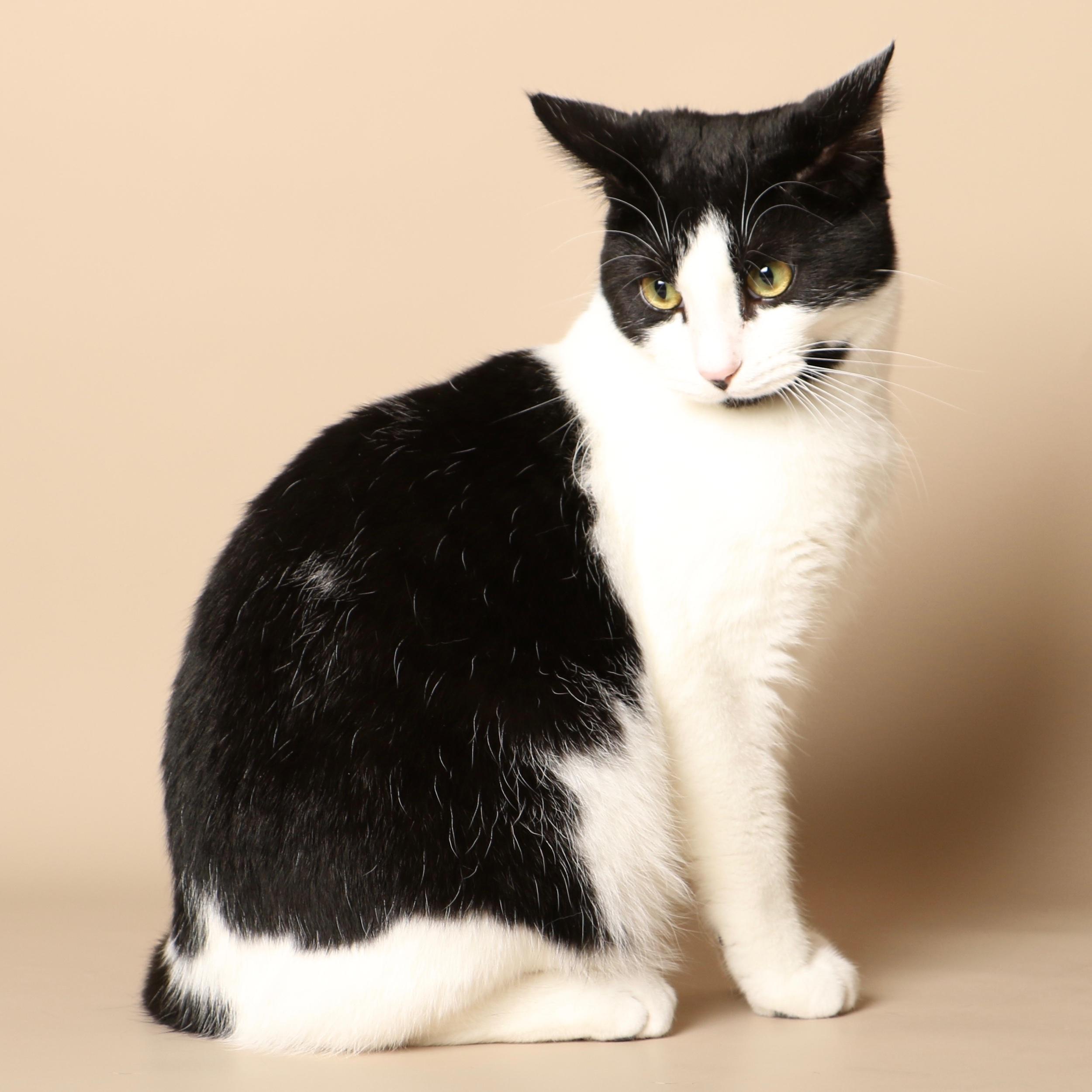0716cats.jpeg