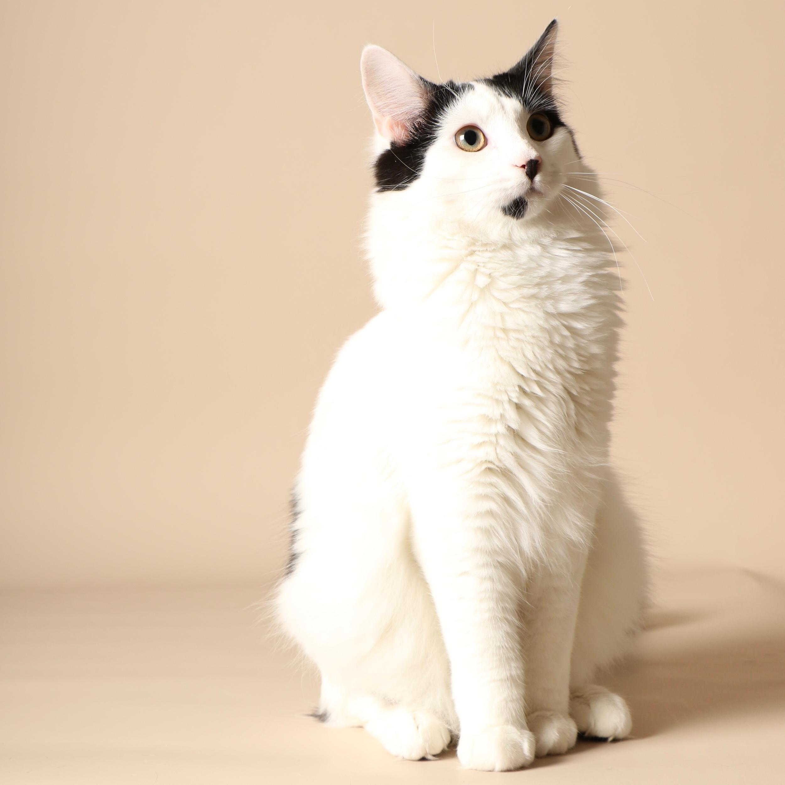 0942cats.jpeg