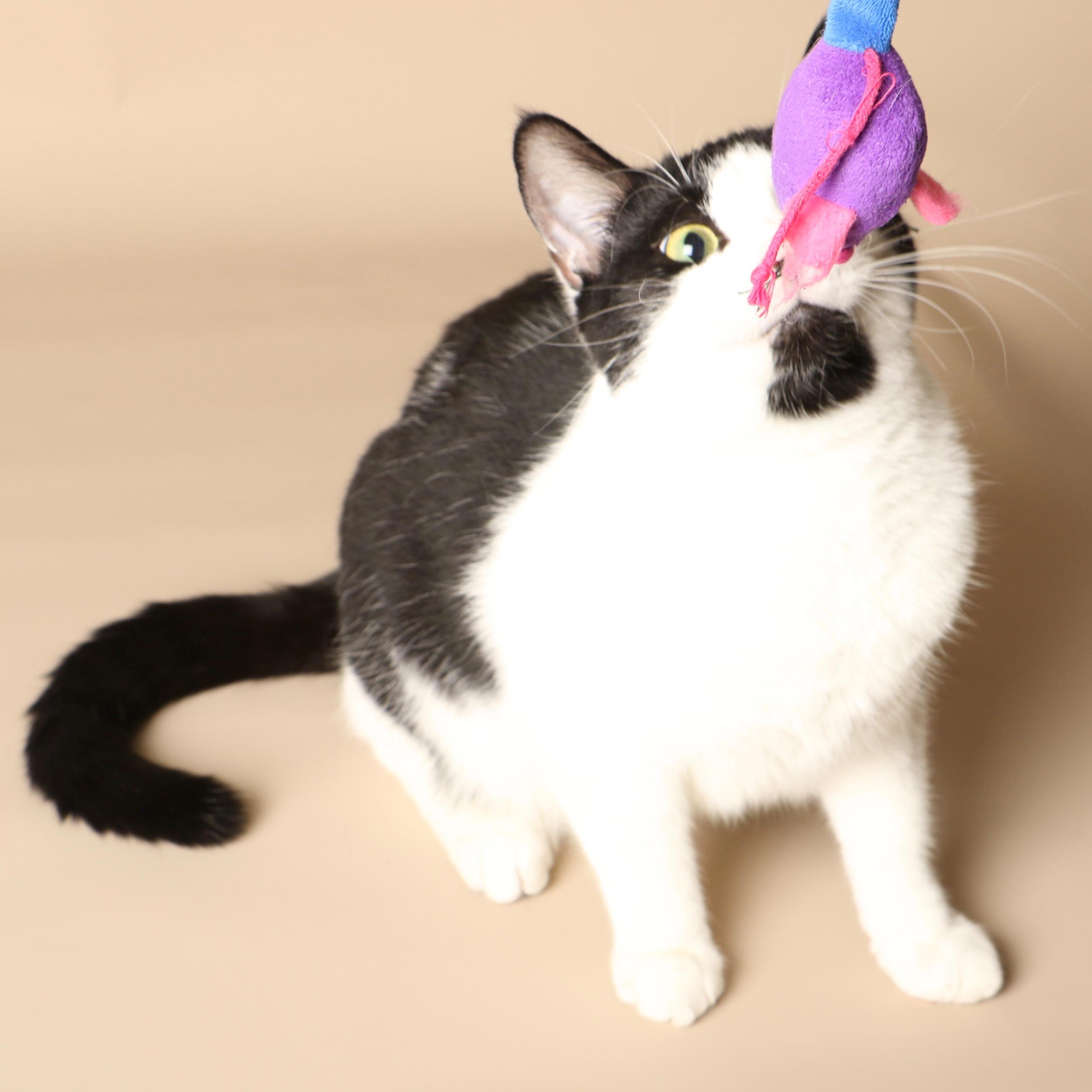0701cats.jpeg
