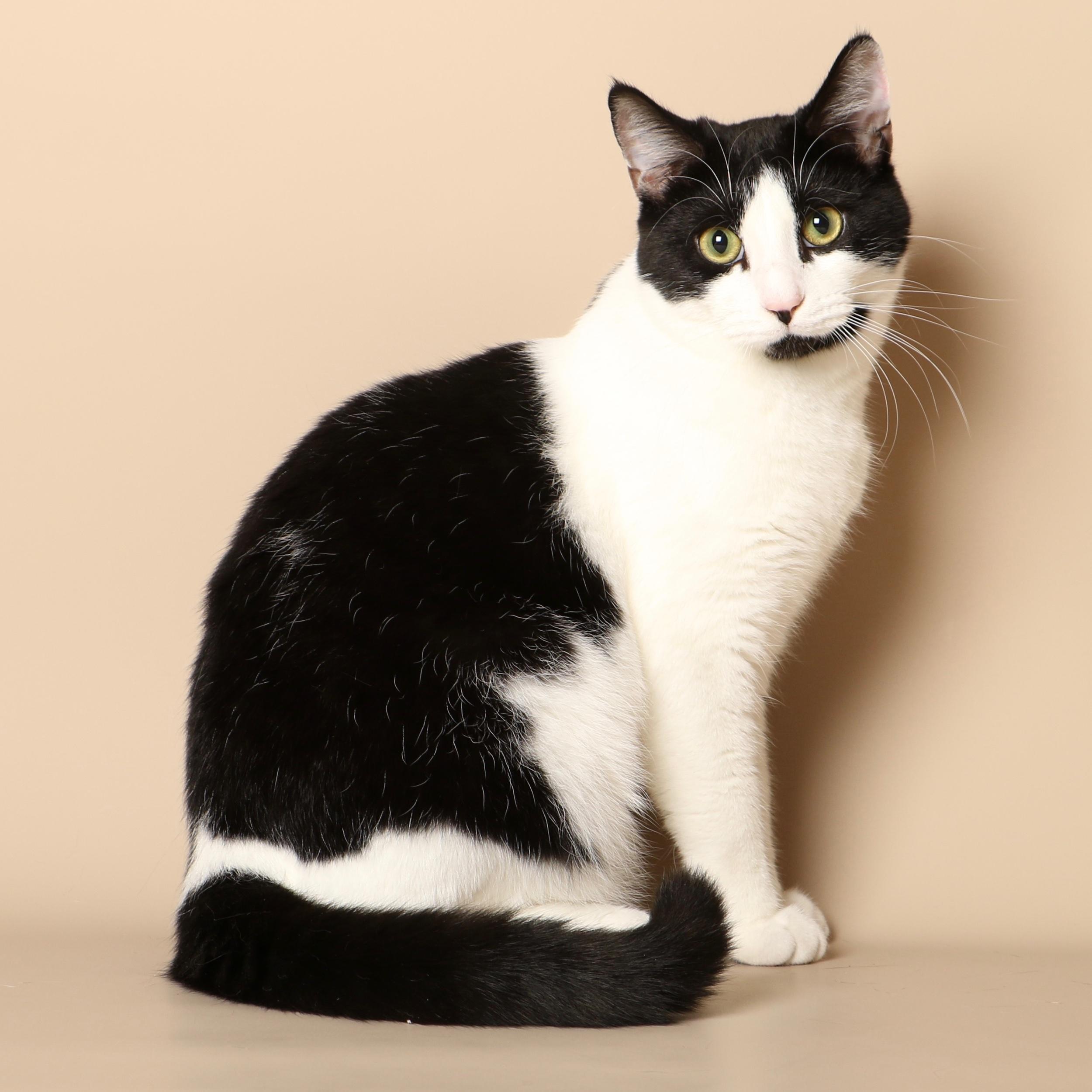 0723cats.jpeg