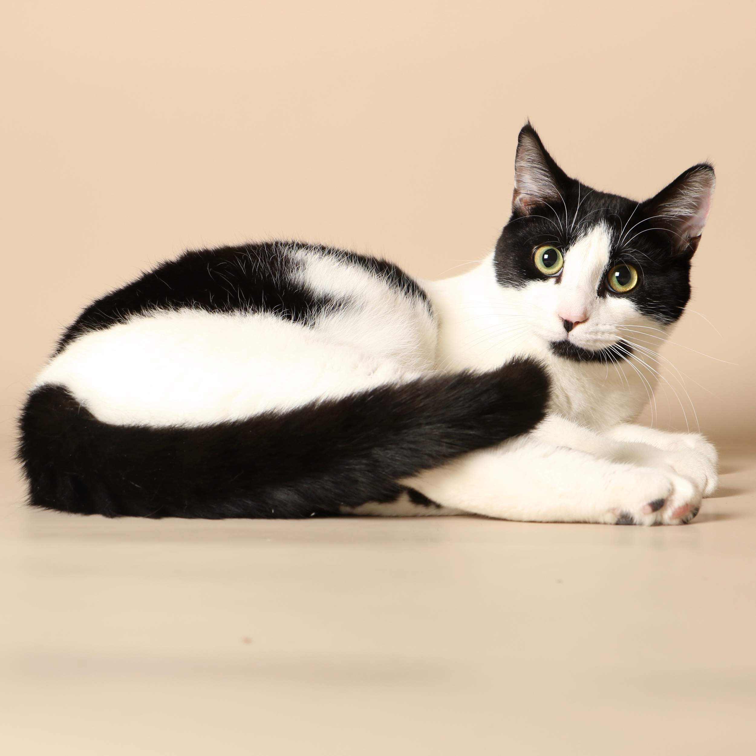 0728cats.jpeg