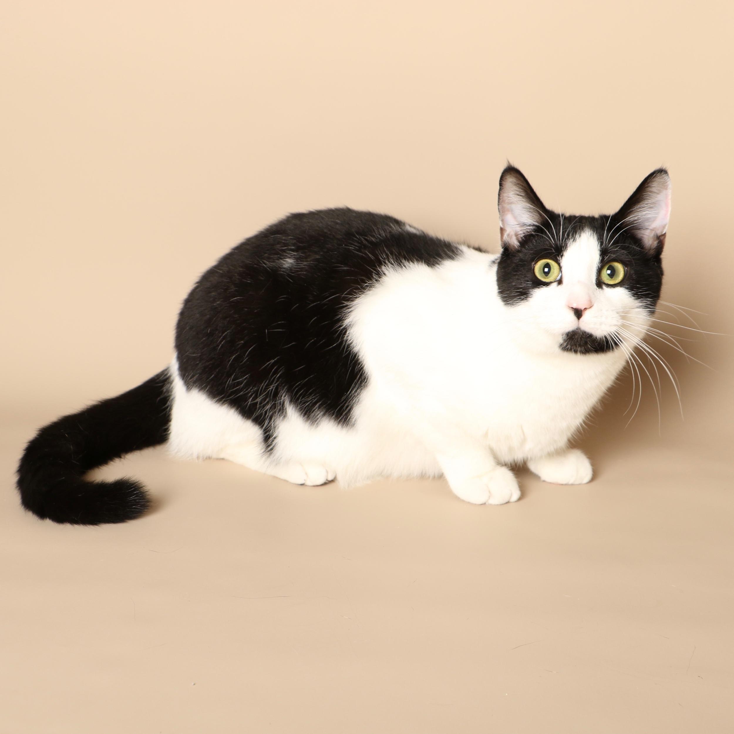 0711cats.jpeg