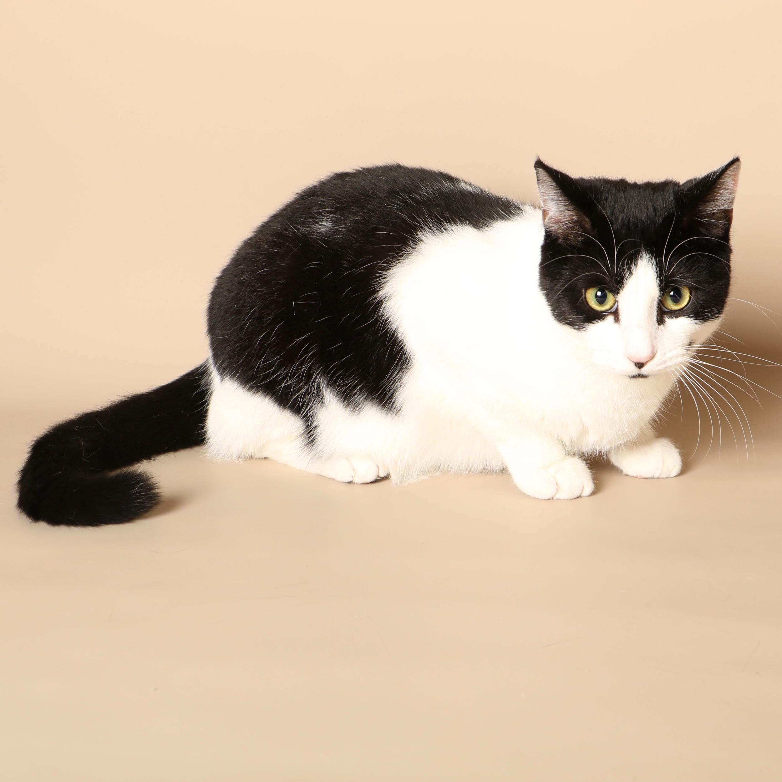 0712cats.jpeg