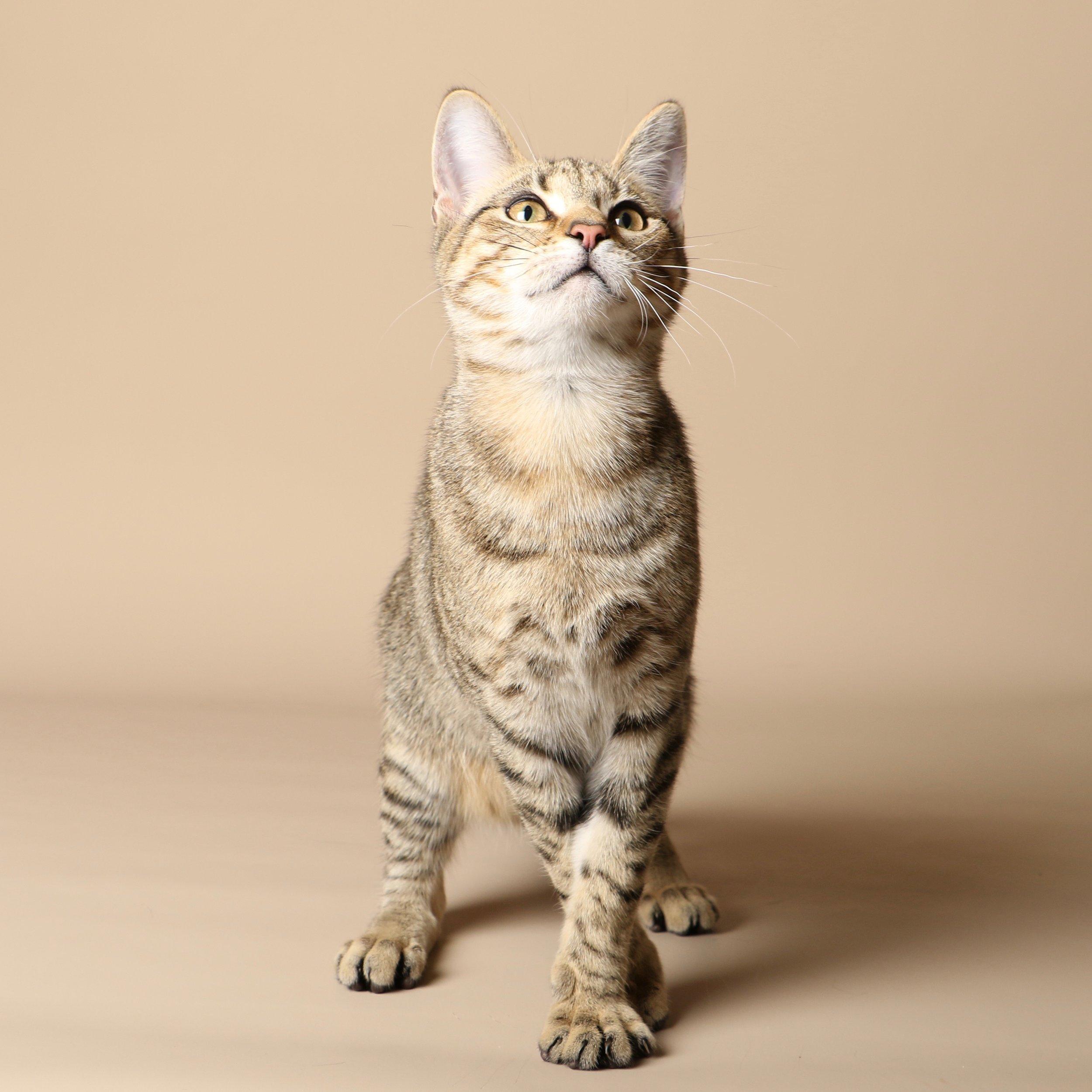 1025cats.jpg