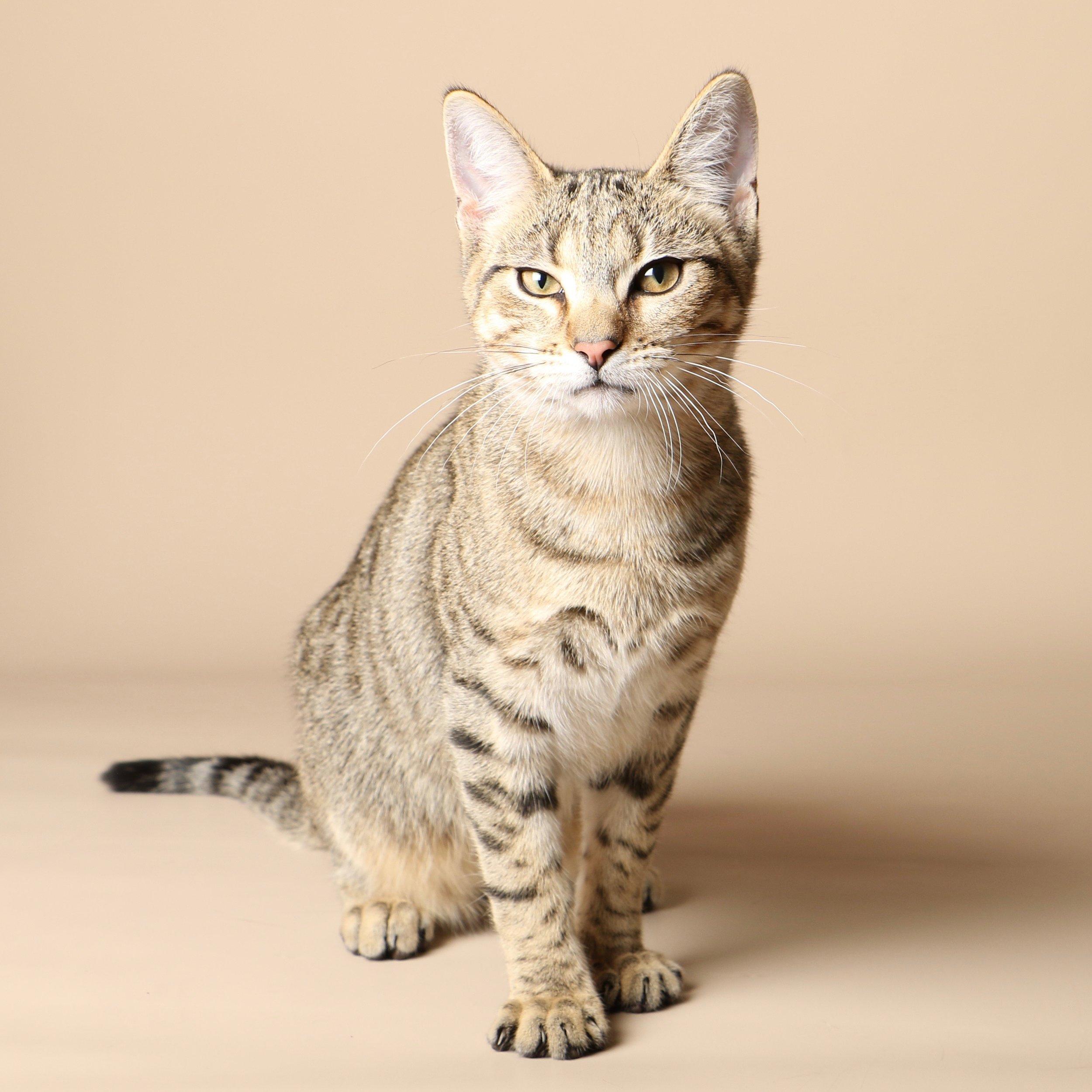 1028cats.jpg