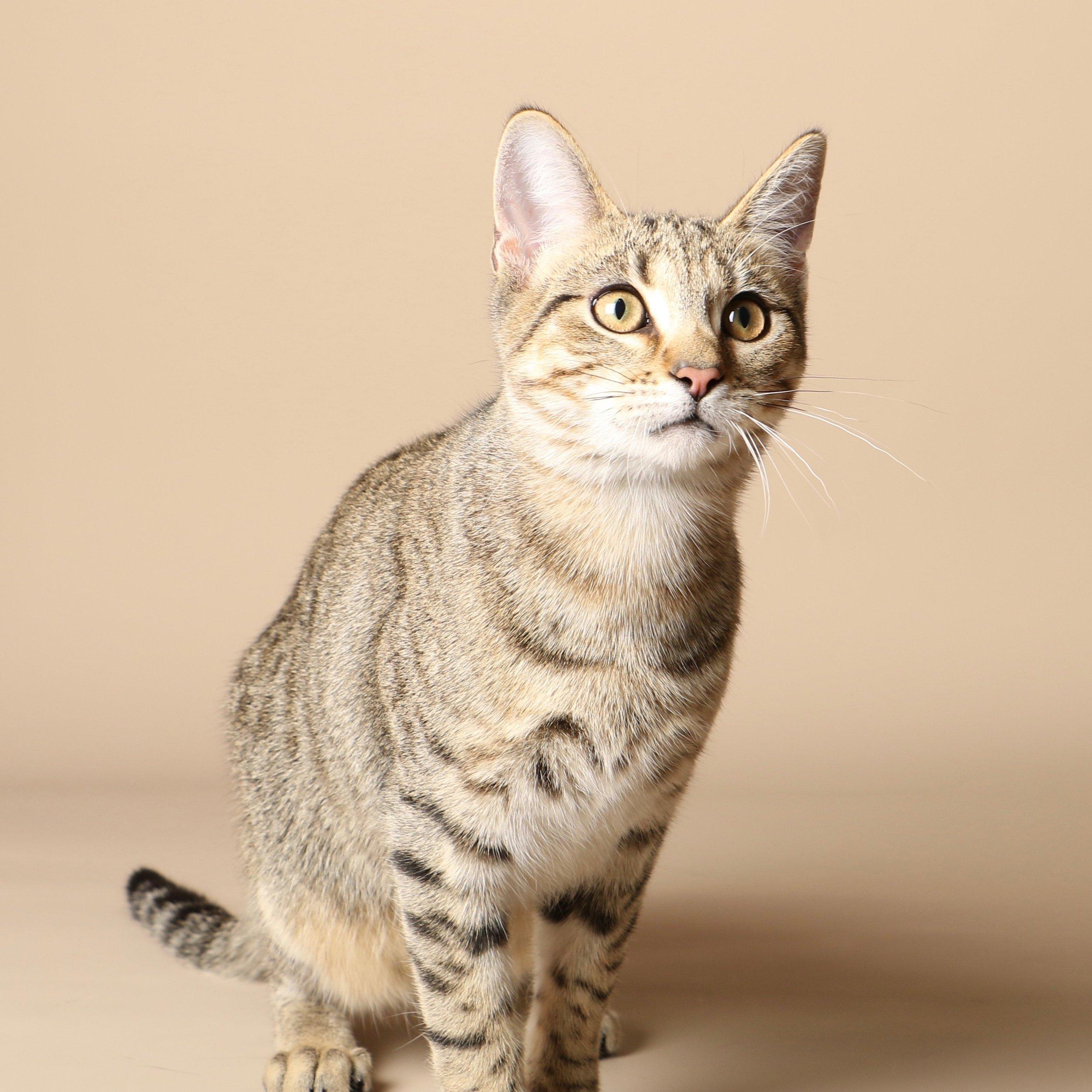 1029cats.jpg