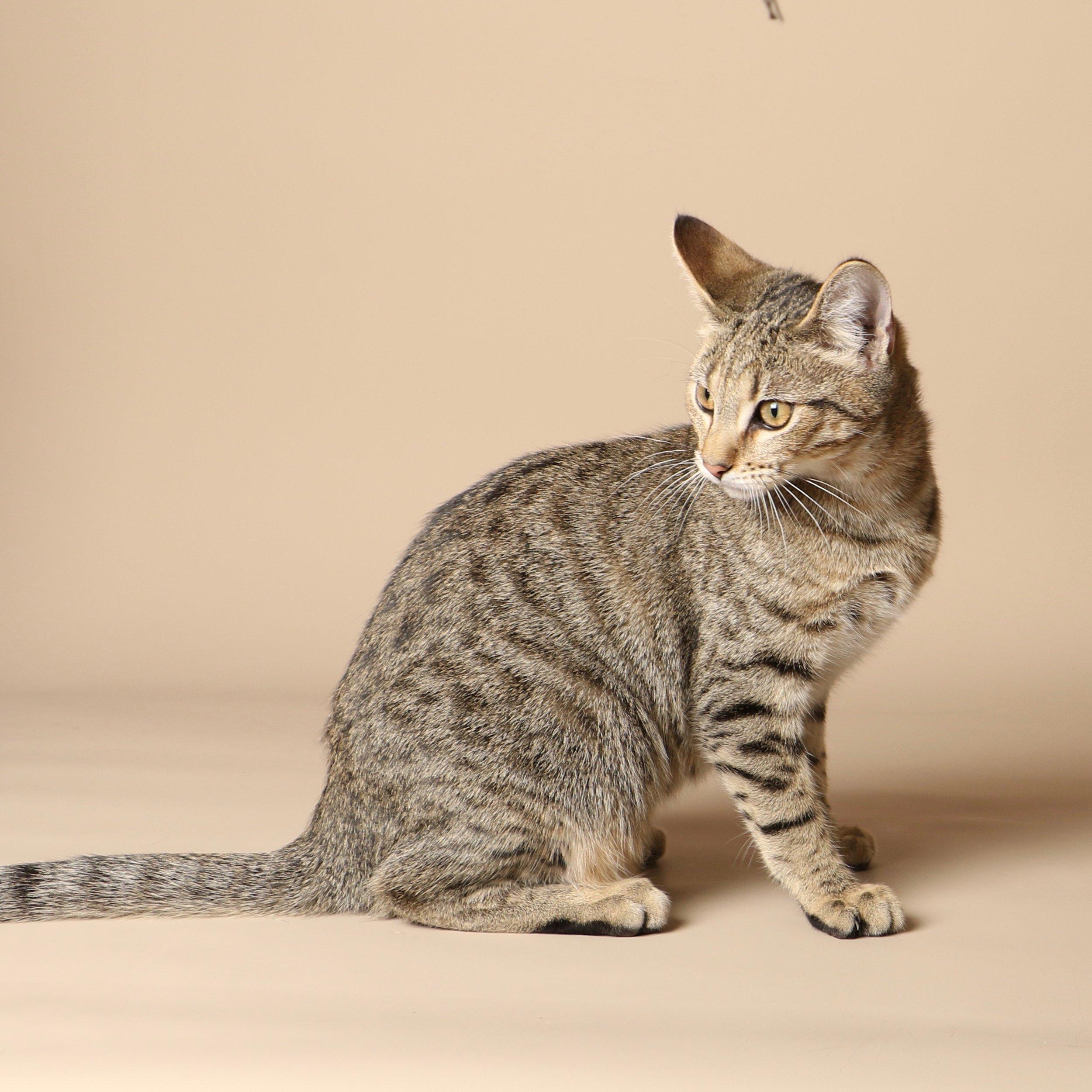 1033cats.jpg