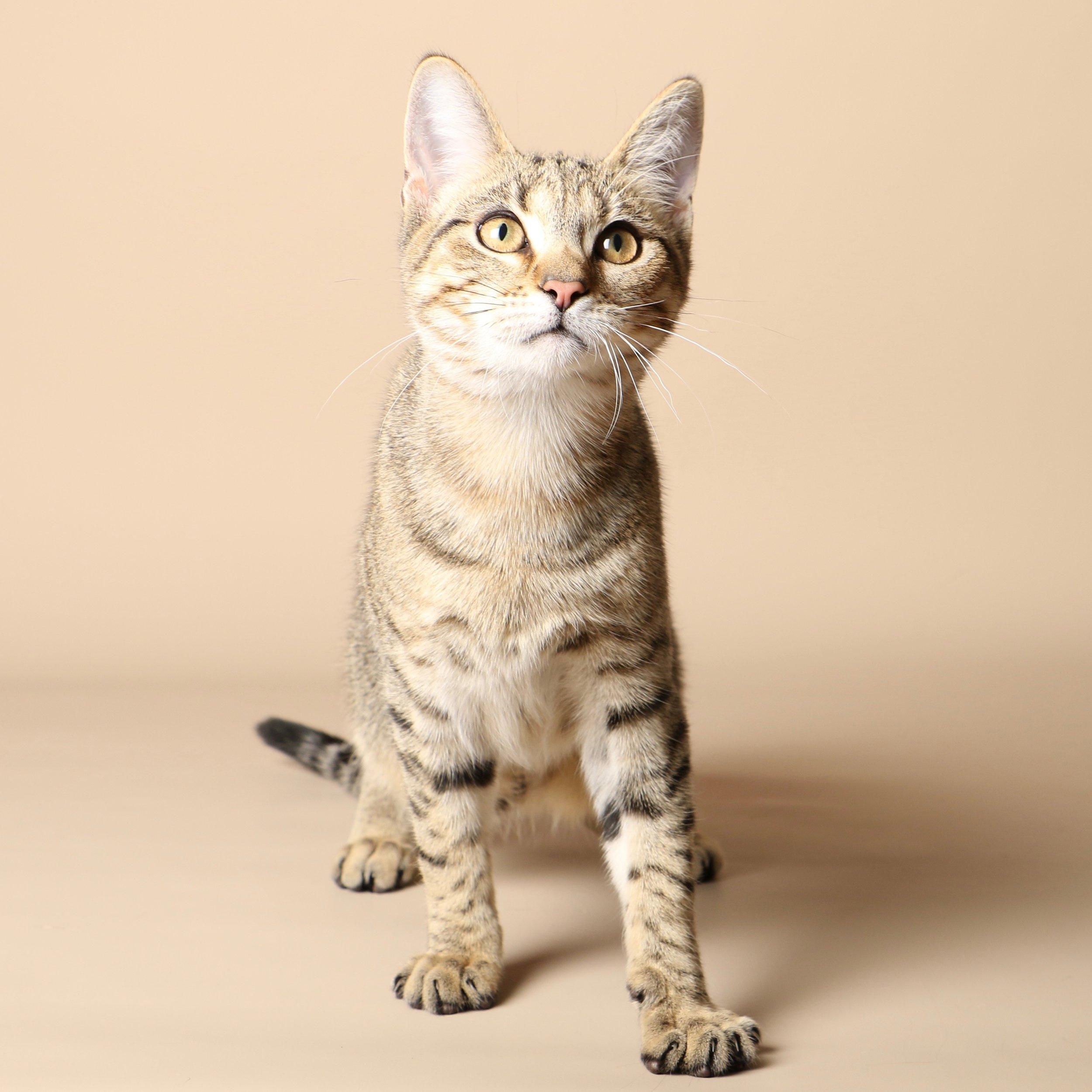 1036cats.jpg