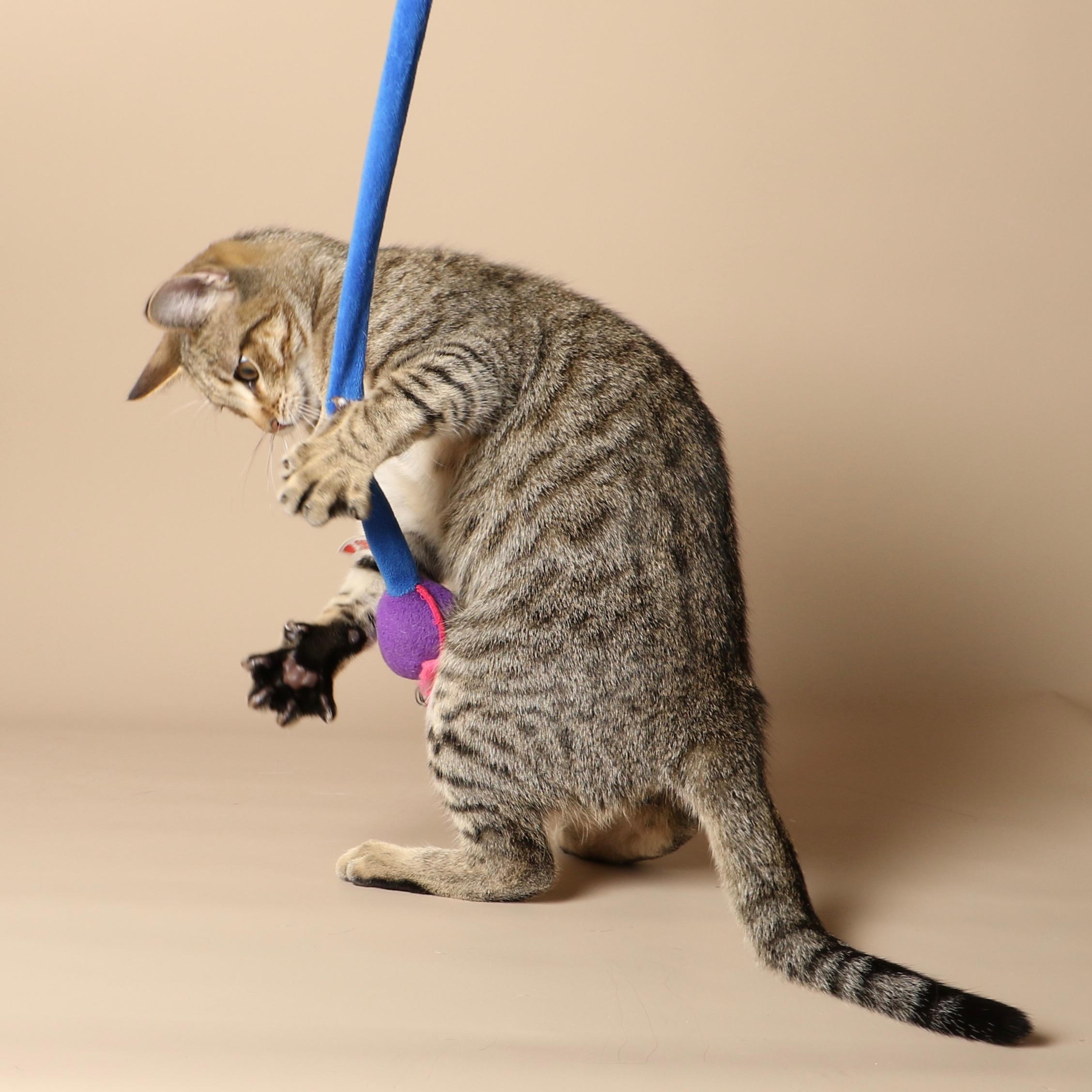 1041cats.jpg