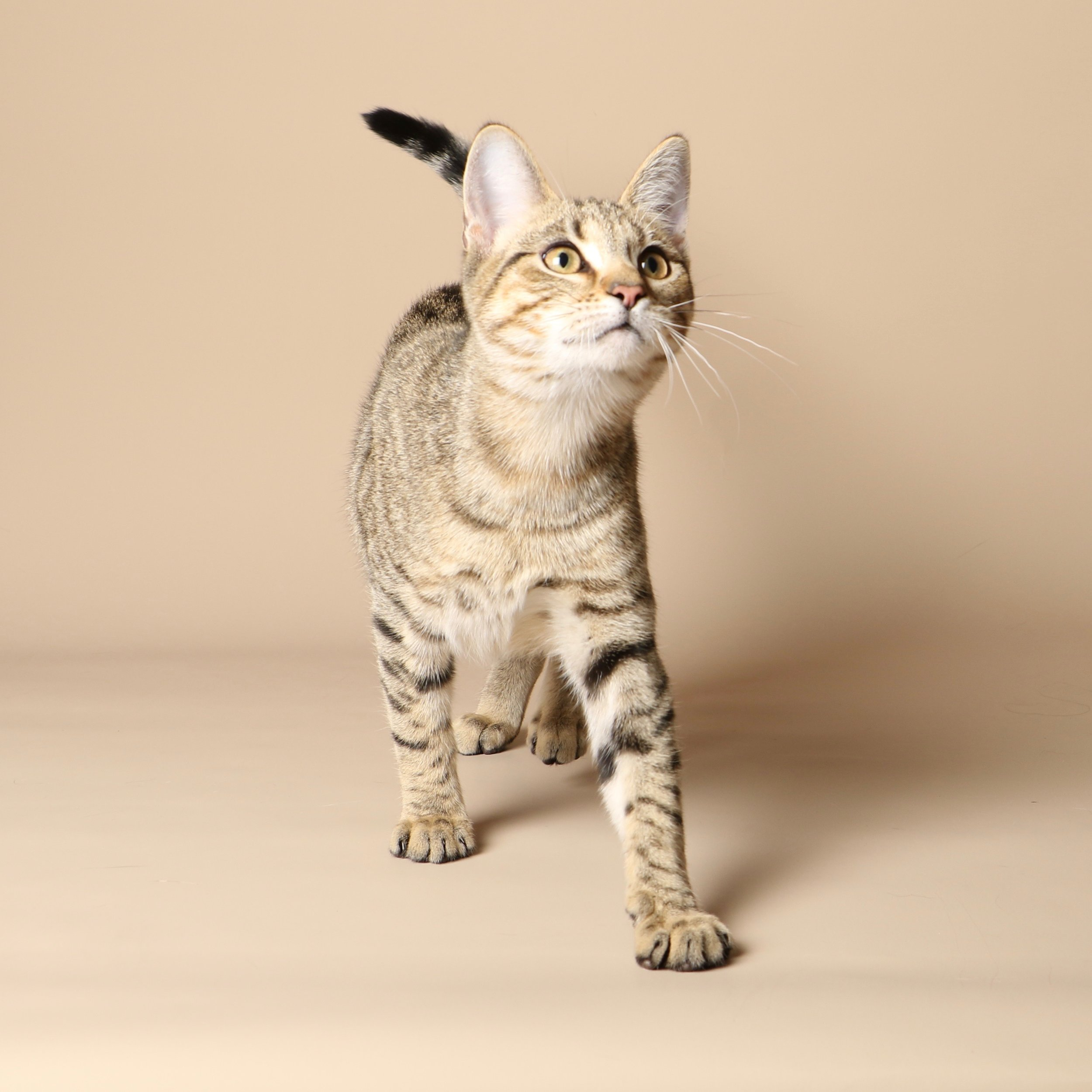 1044cats.jpg