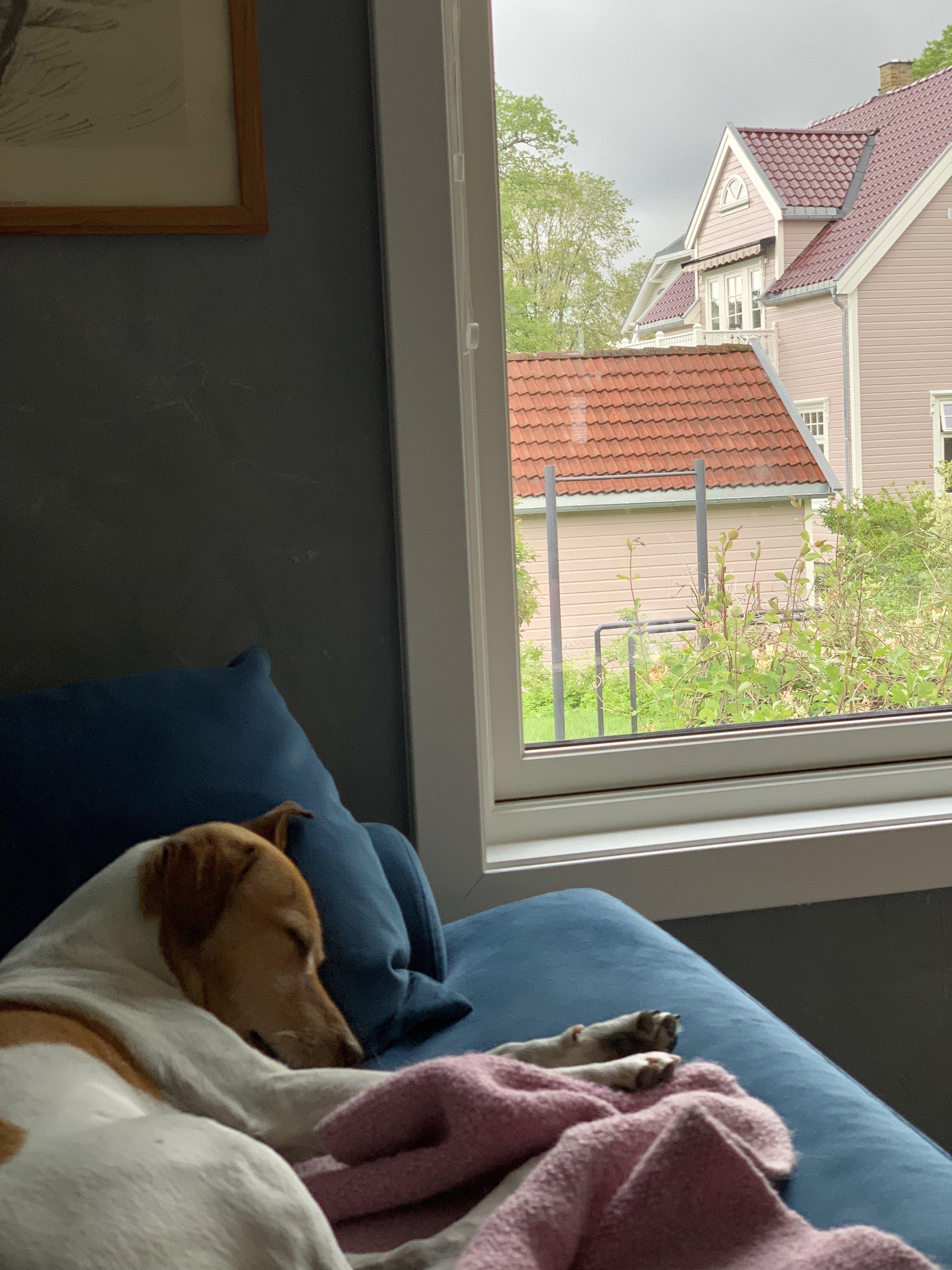 Til og med hunden insisterer på å være inne i regnværet!