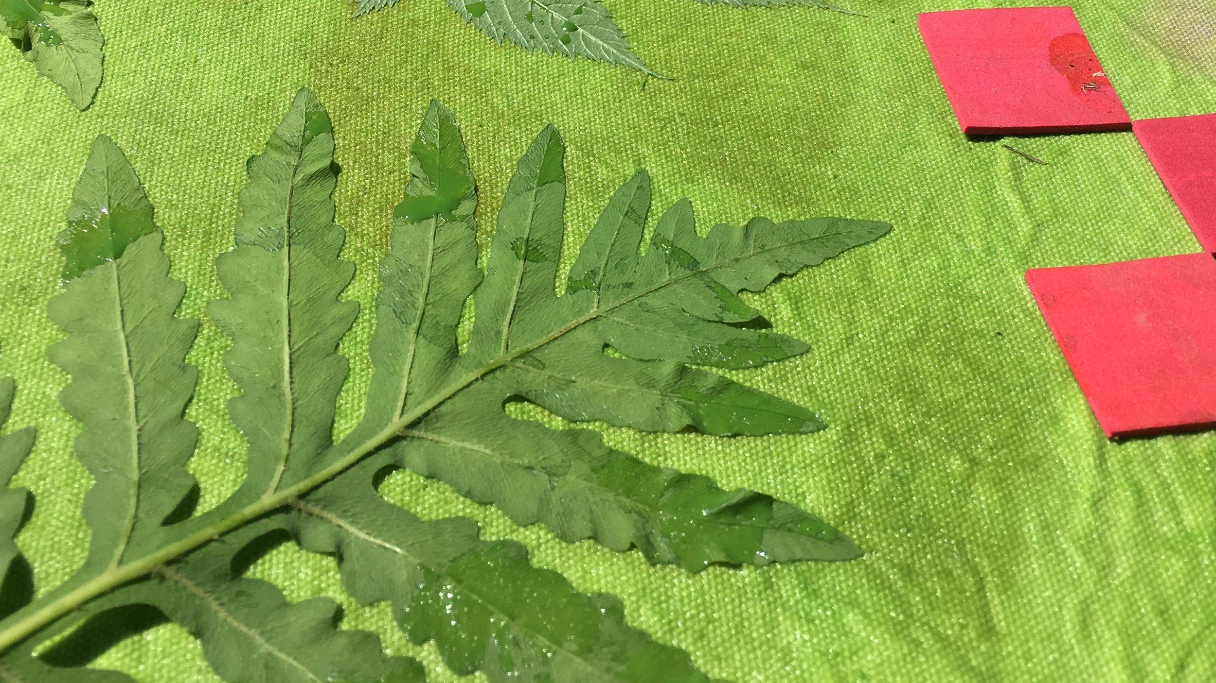 Sensitive fern and craft foam squares