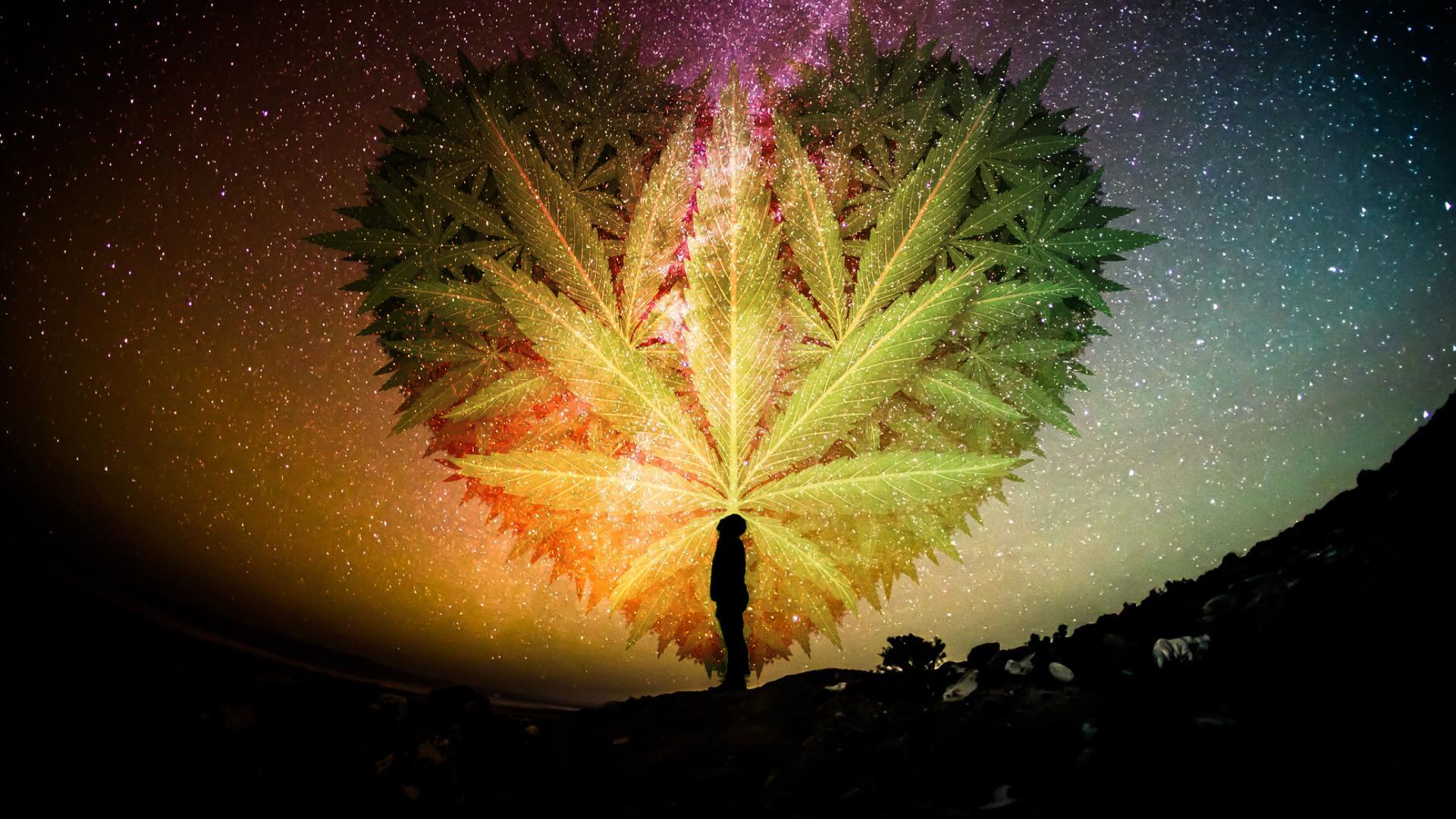 Cannabis-psychedelic-medicinal-mindfulness-boulder.PNG