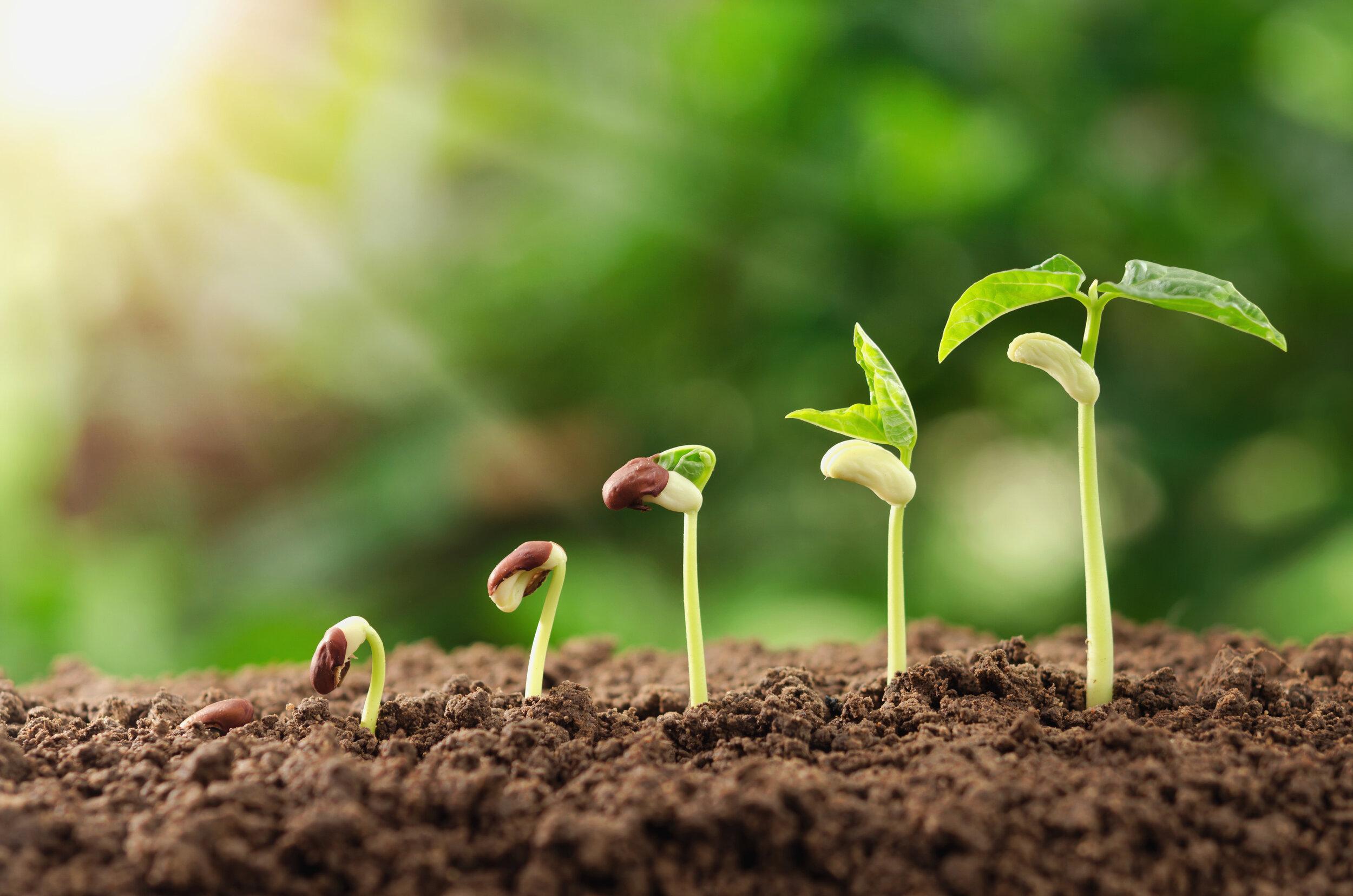 seeds growing integration group image.jpg