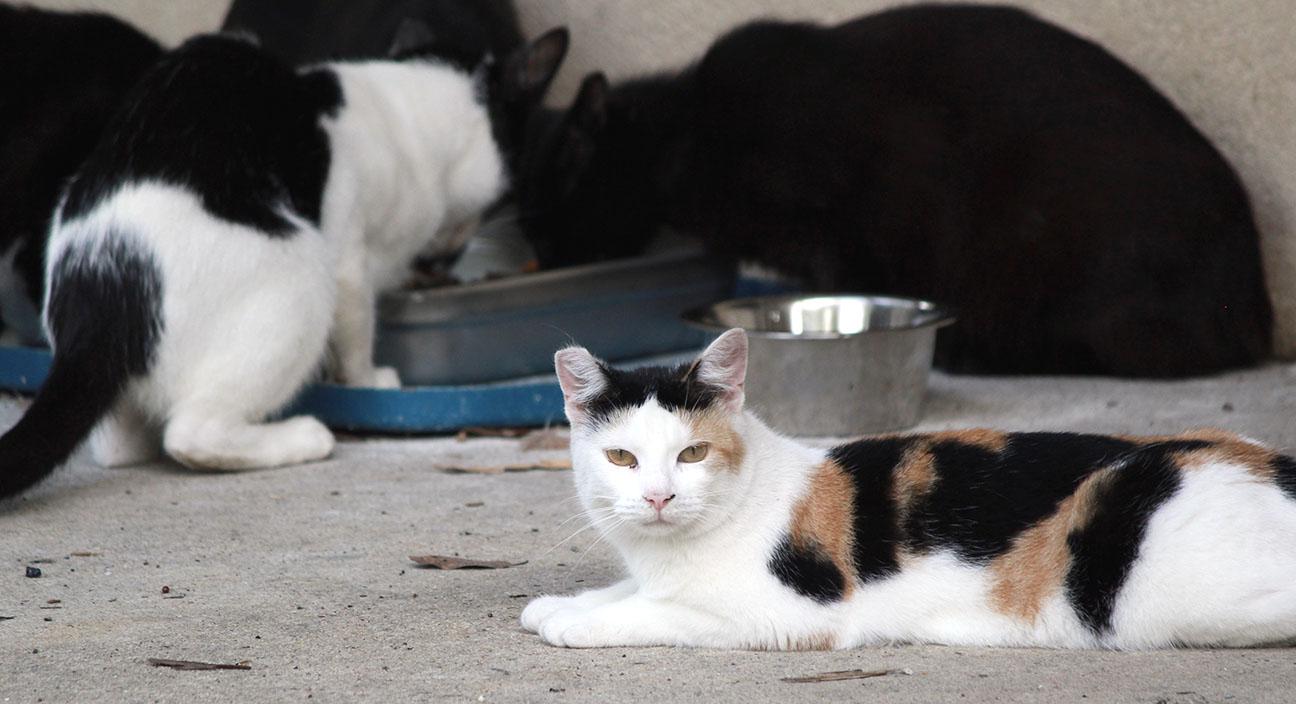 Cat rescue11.jpg
