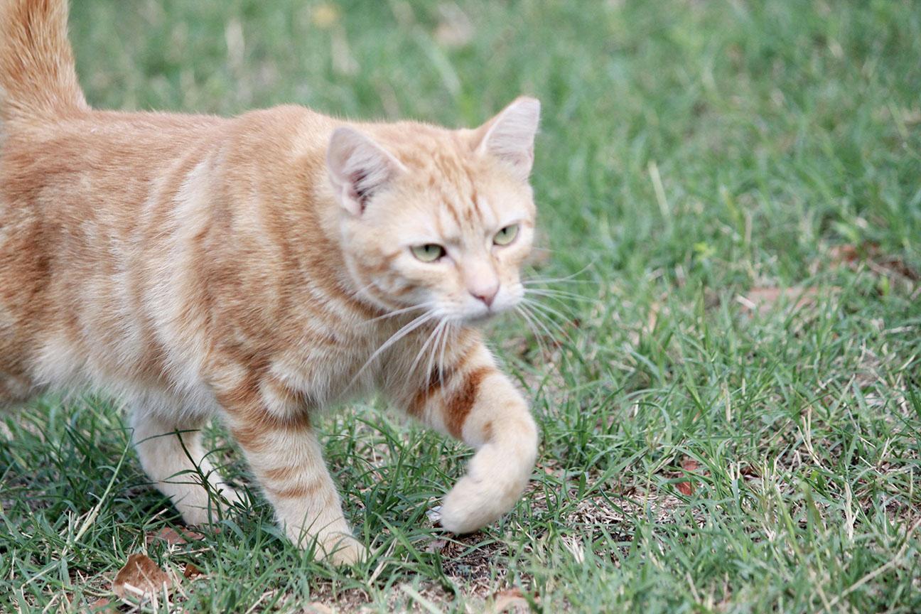 Cat rescue16.jpg