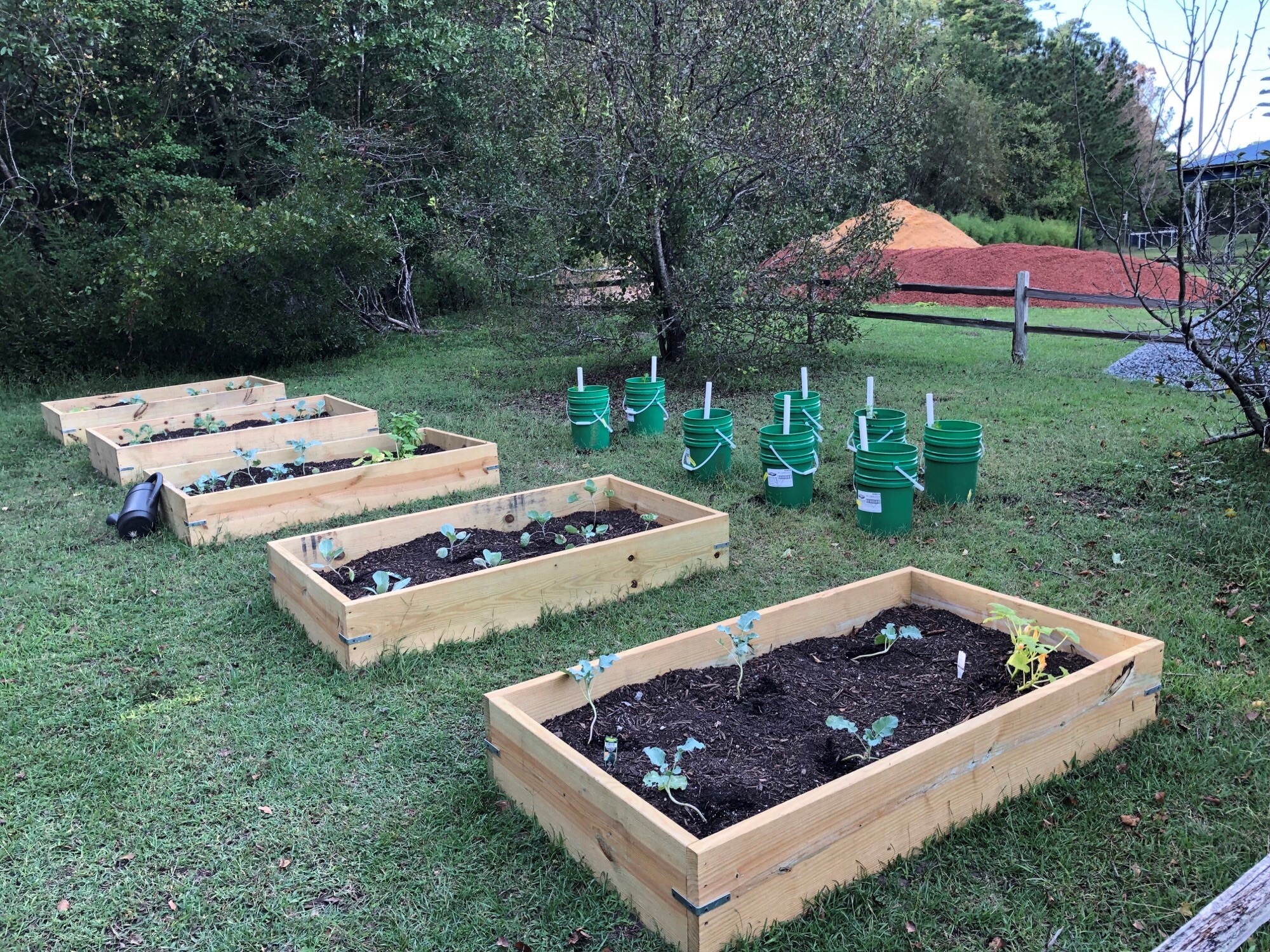 The APA garden uses raised beds and buckets to cultivate a range of cool weather vegetables.