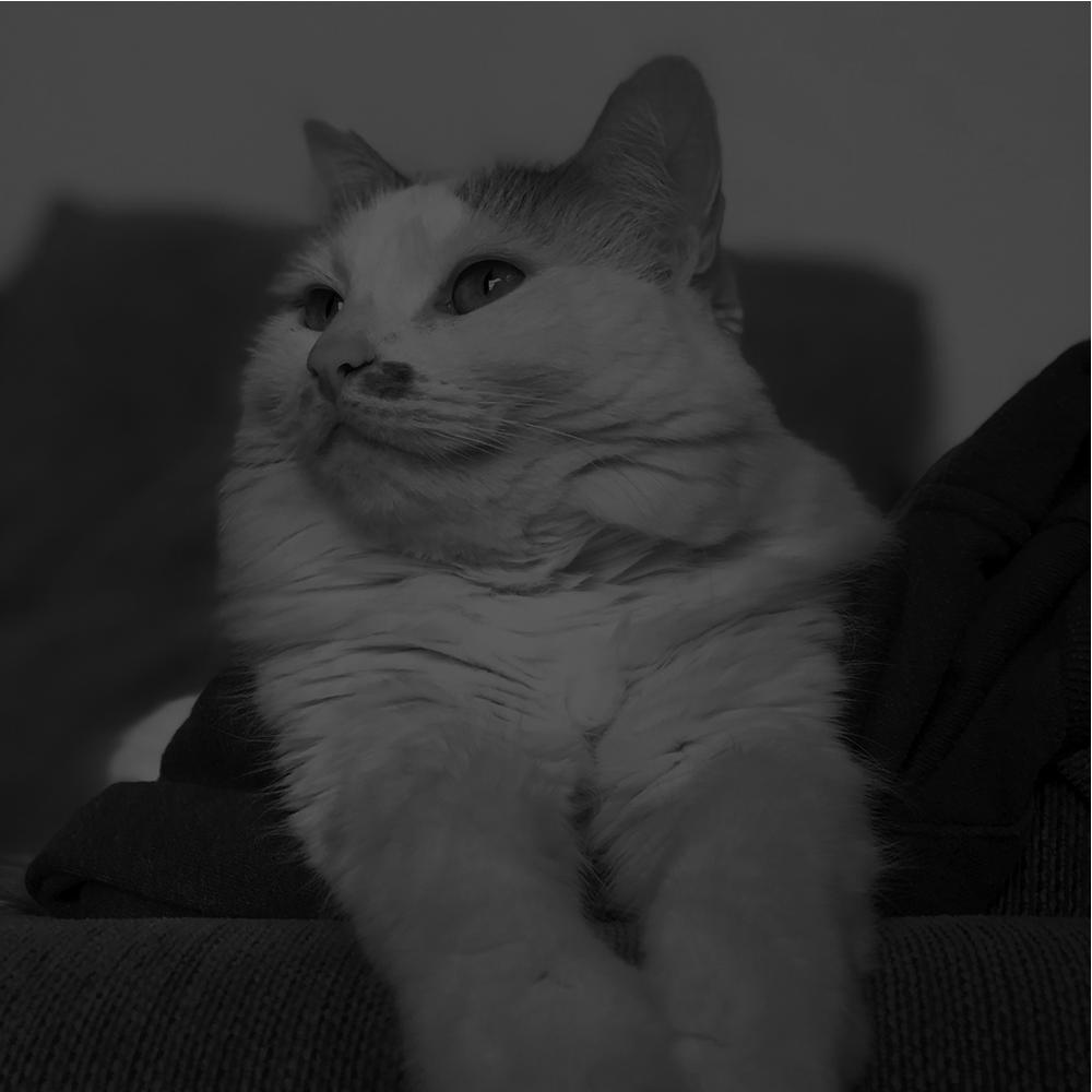 FELINE (CAT) MEDICINE -