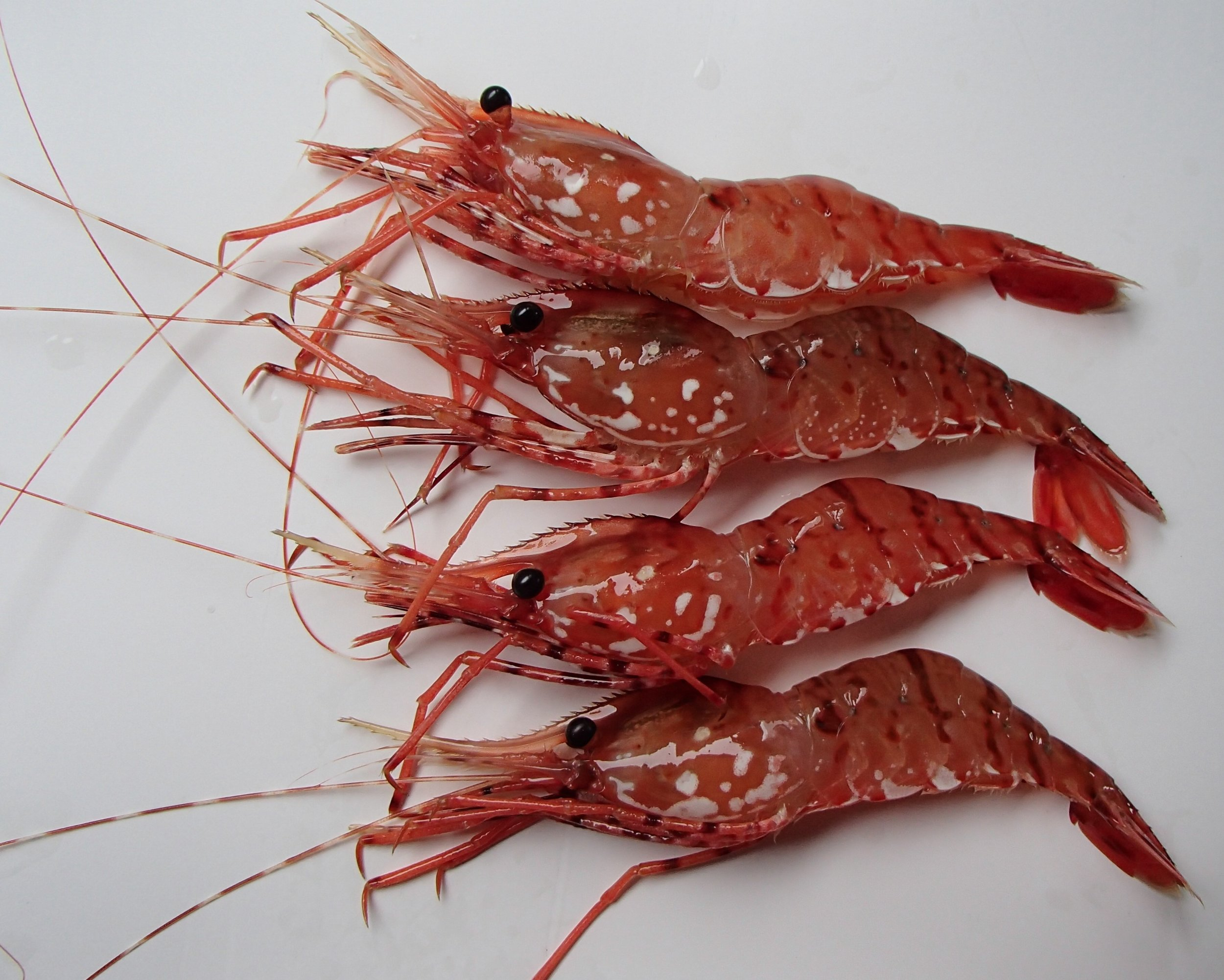 That wild-caught seafood is healthier than its farmed alternative due to its more diverse diet and freedom of range. -