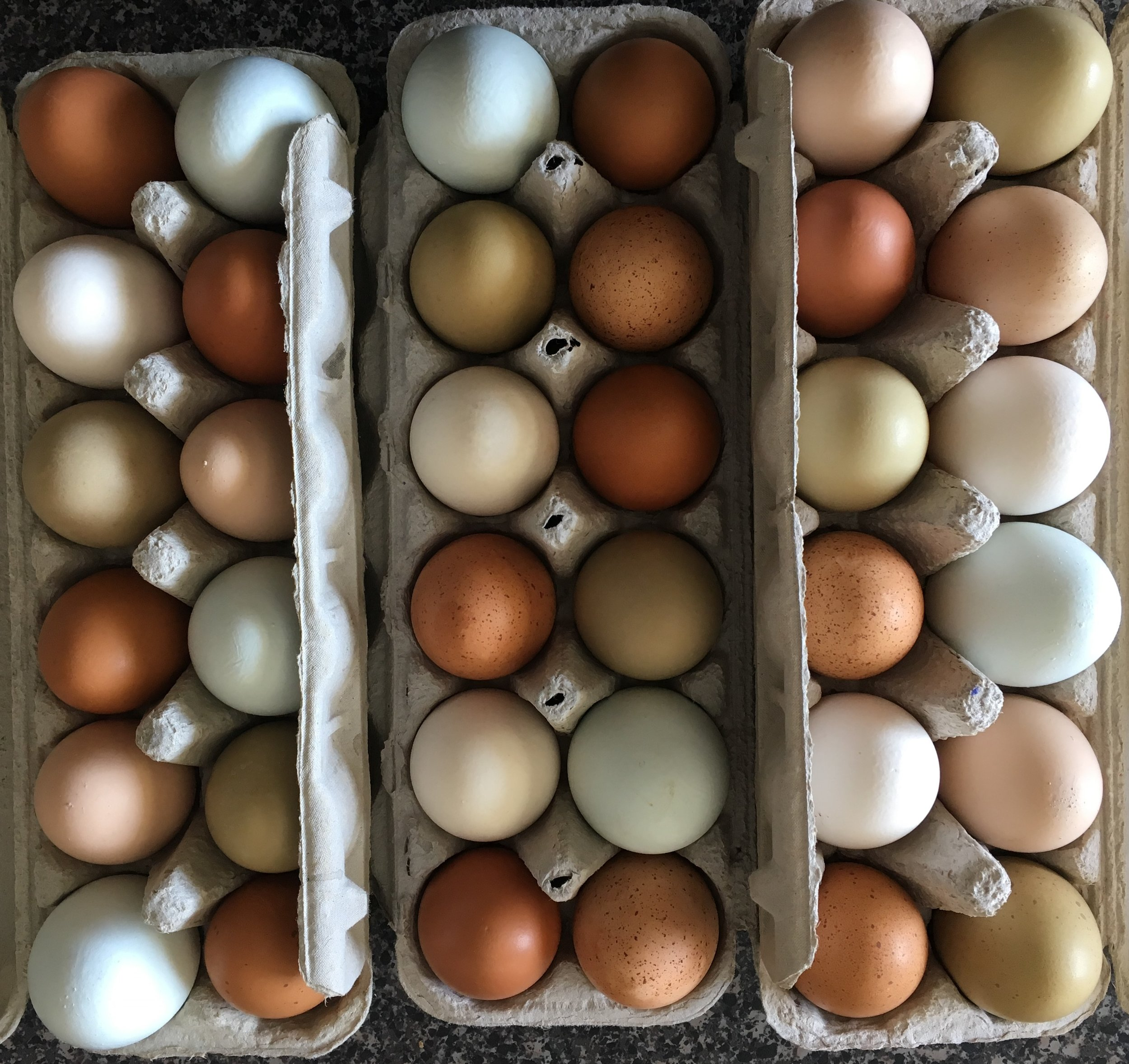 That the lovely eggs produced by such hens are healthier and more delicious than the caged variety. -