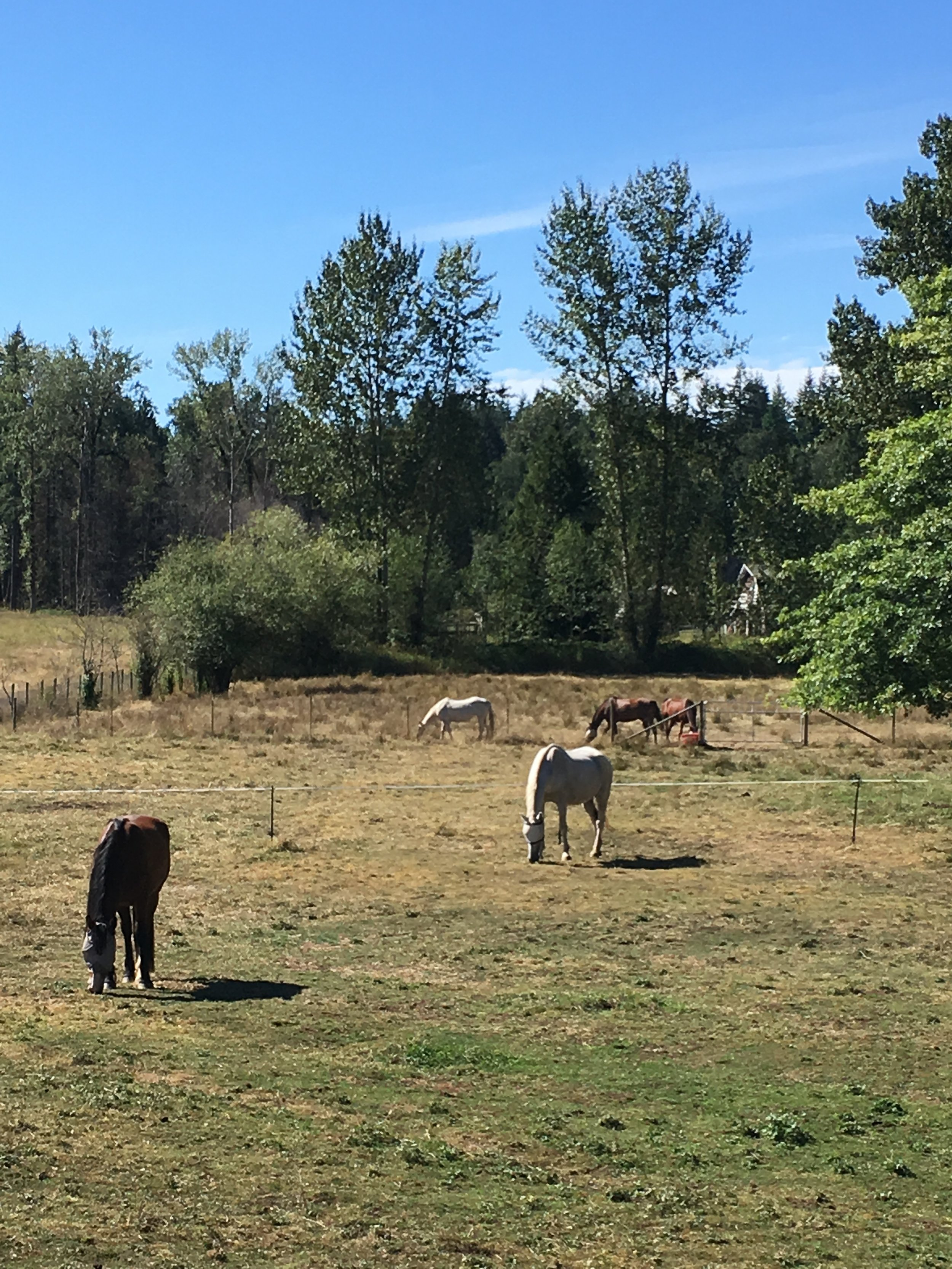 - Pasture turn-out on a warm September day