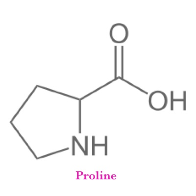 Proline   What It Does?   The body uses proline to Proline aids the body in breaking down proteins for use in healthy cells it also plays an important role in combating arteriosclerosis, or harden   What It's Good For?   Rebuilding Connective Tissue from UV exposure and Aging, Stimulating Glycine Receptors, Production of Collagen and Cartilage, Recovery of Traumatic Injury and Overuse